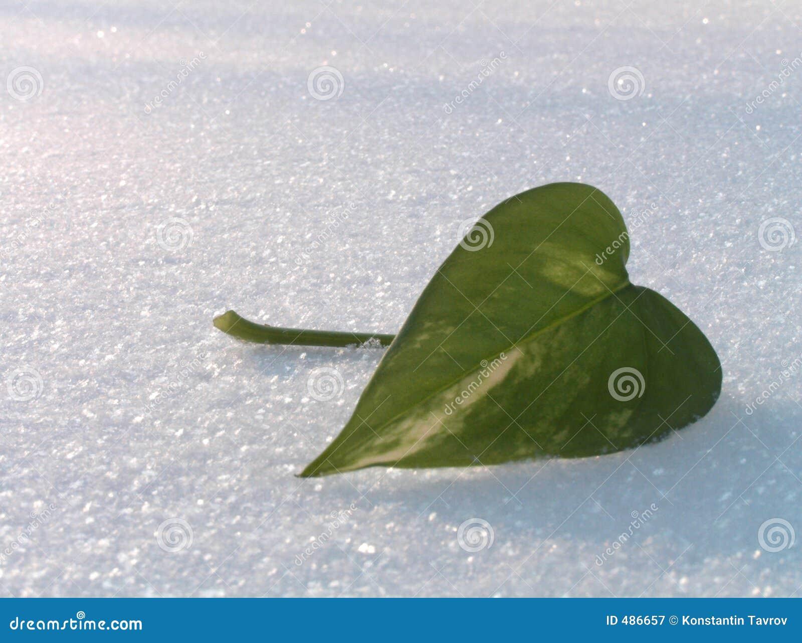 зеленый снежок листьев