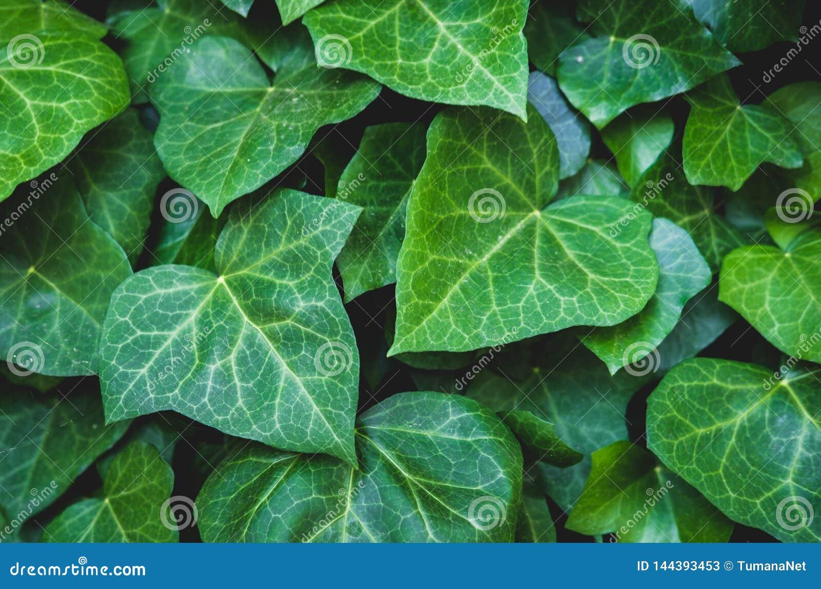 Зеленый цветочный узор листьев Естественная предпосылка сверху r