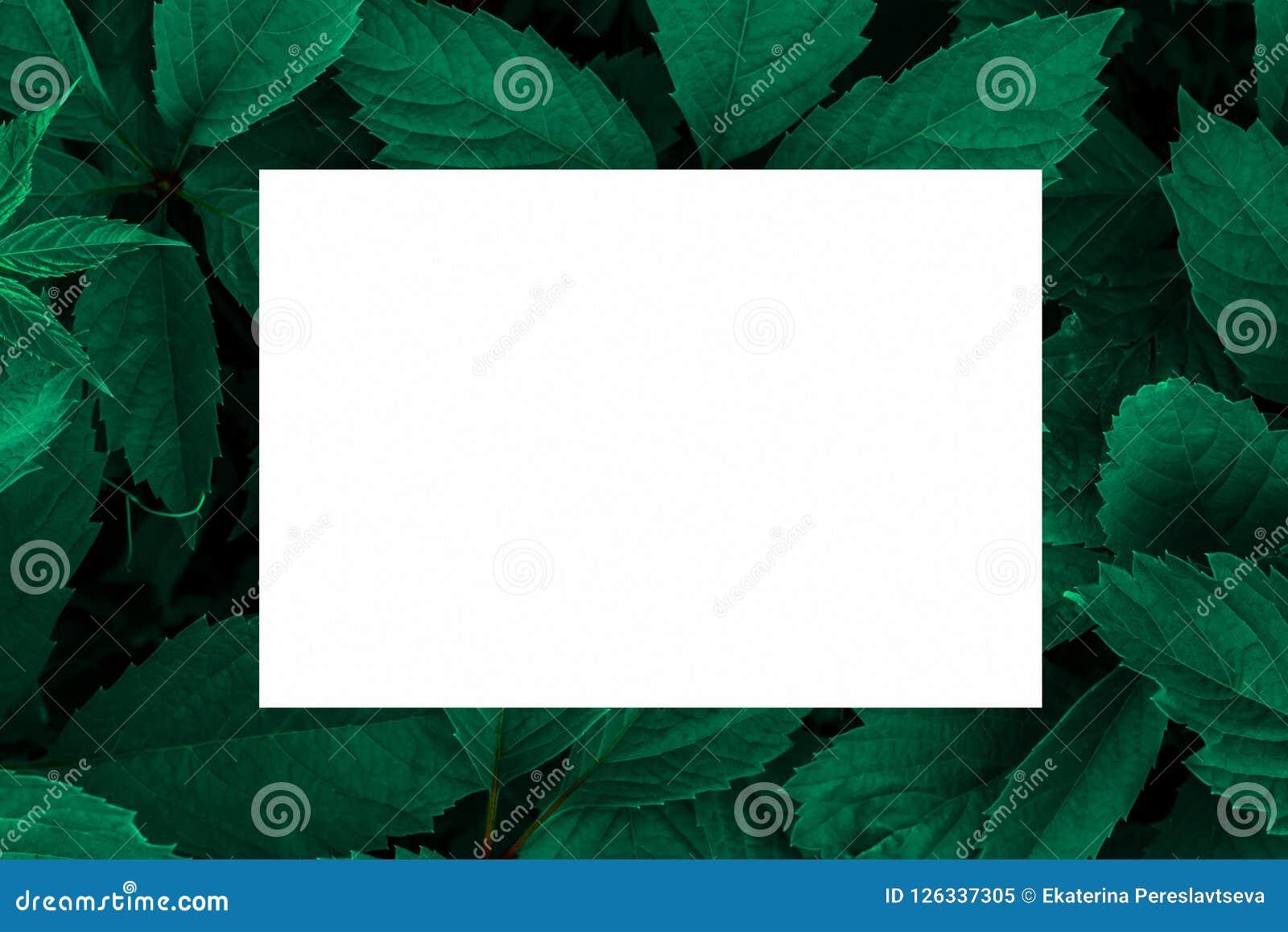 Зеленый цвет выходит как фон и белый лист бумаги для ярлыка