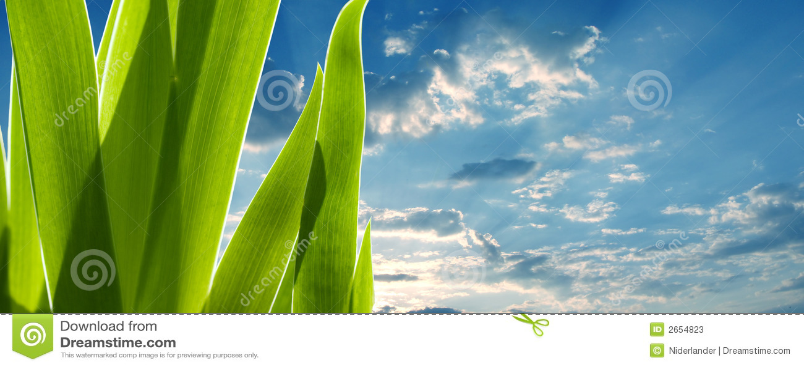 зеленый цвет выходит небо