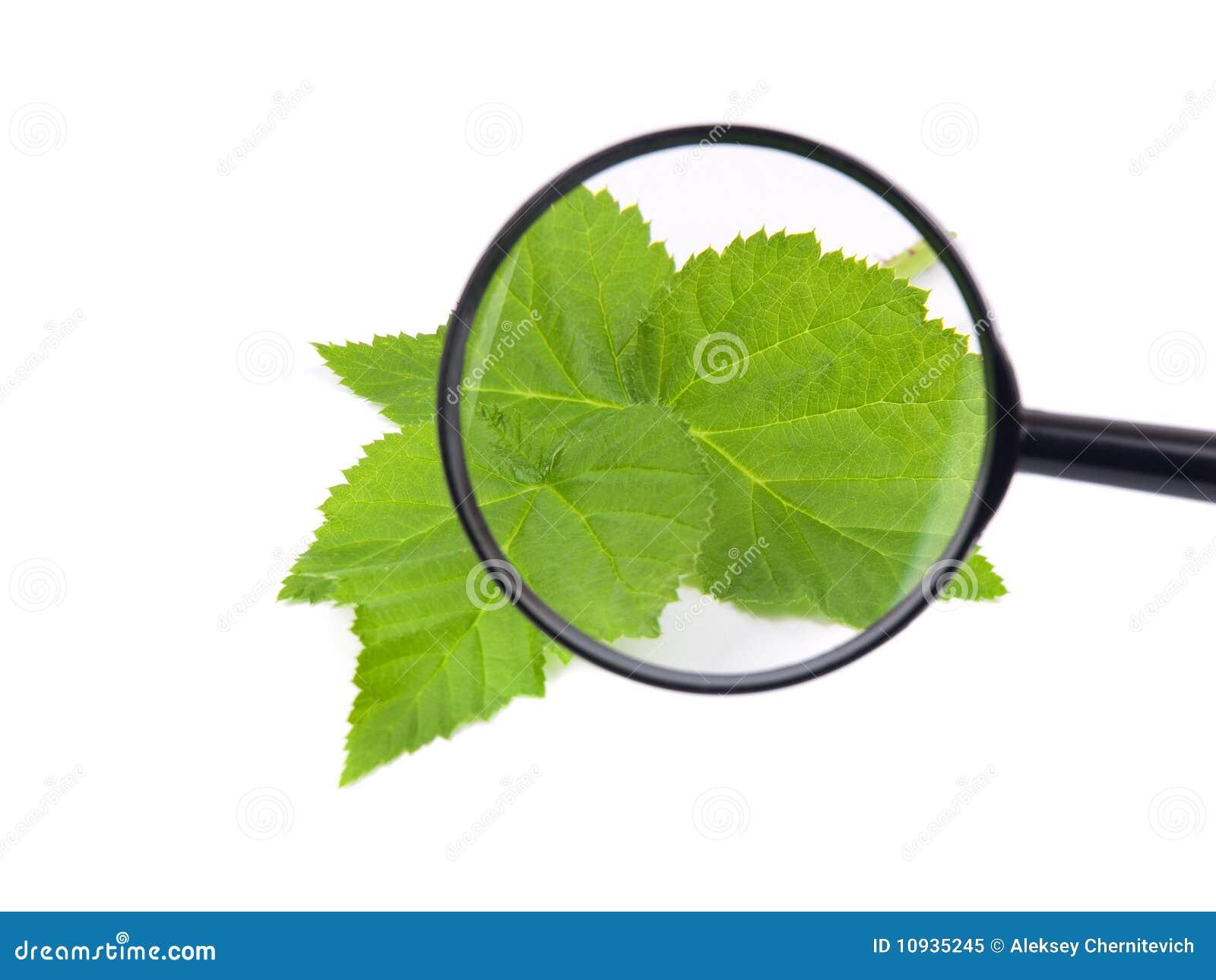 зеленый цвет выходит loupe