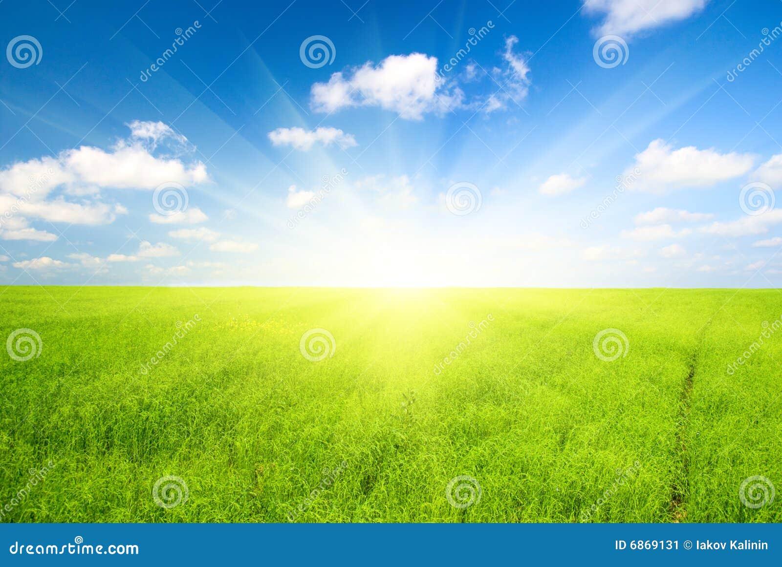 зеленый цвет льна поля