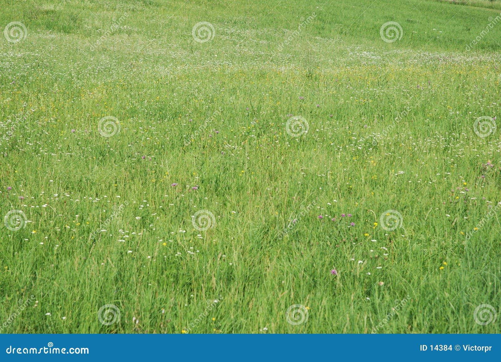 зеленый цвет поля