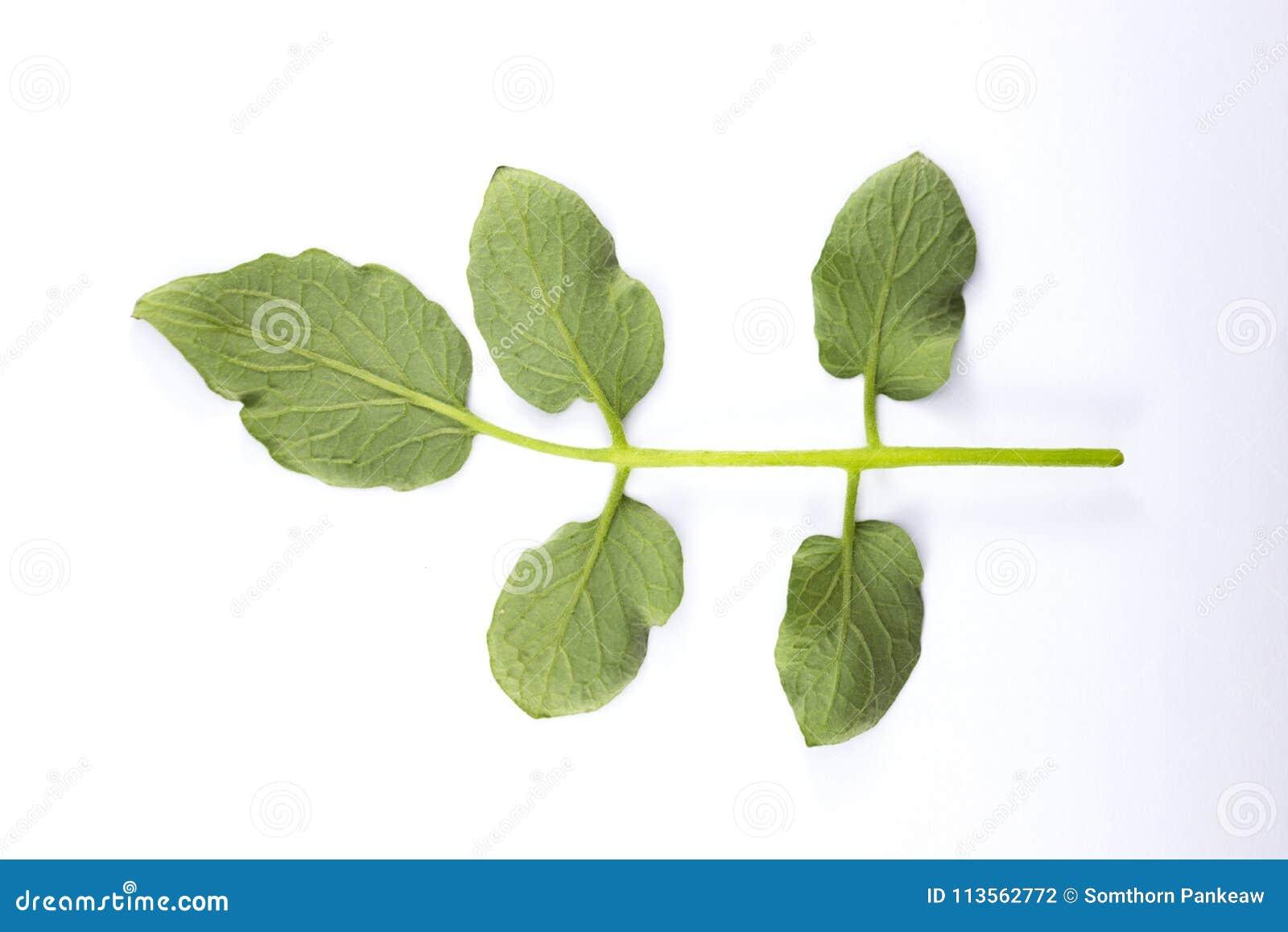 зеленый цвет предпосылки выходит белизна