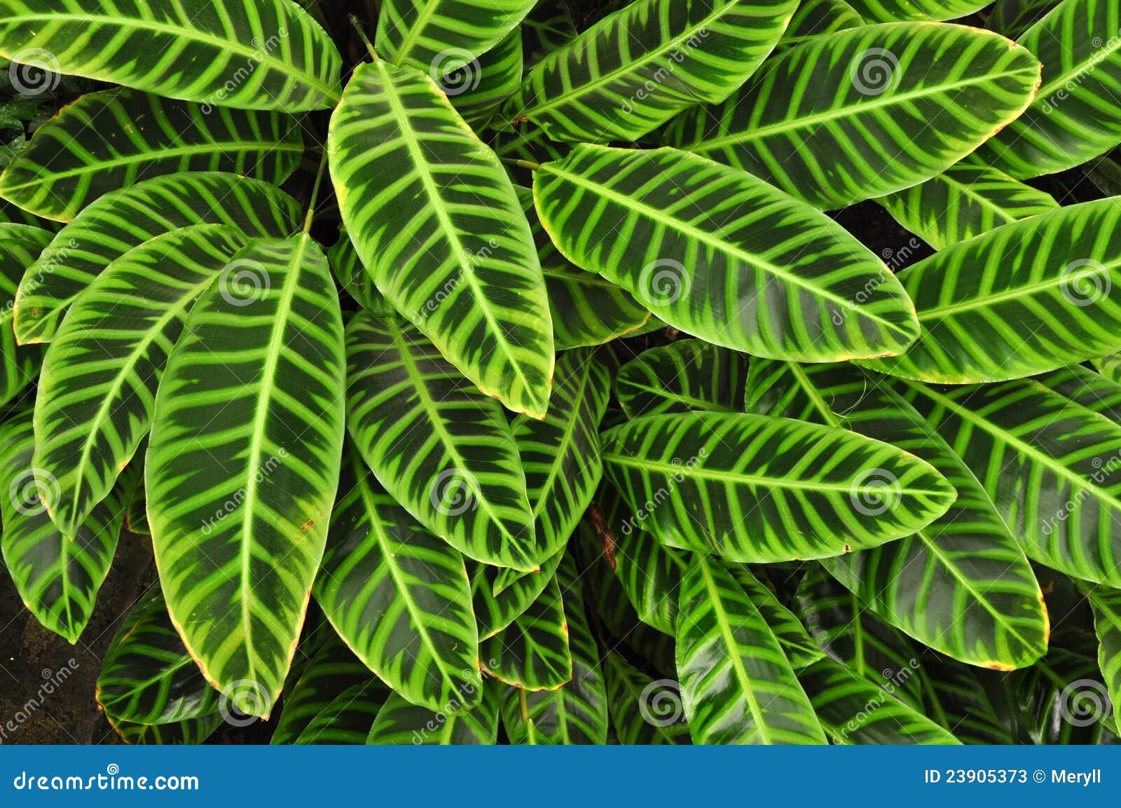 зеленый цвет предпосылки выходит тропической