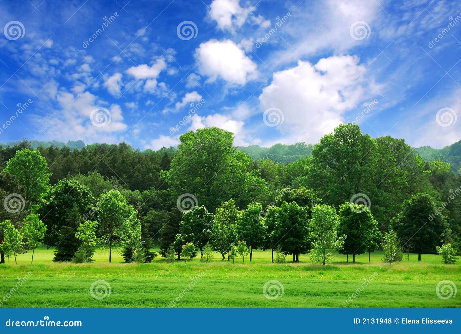 зеленый цвет пущи