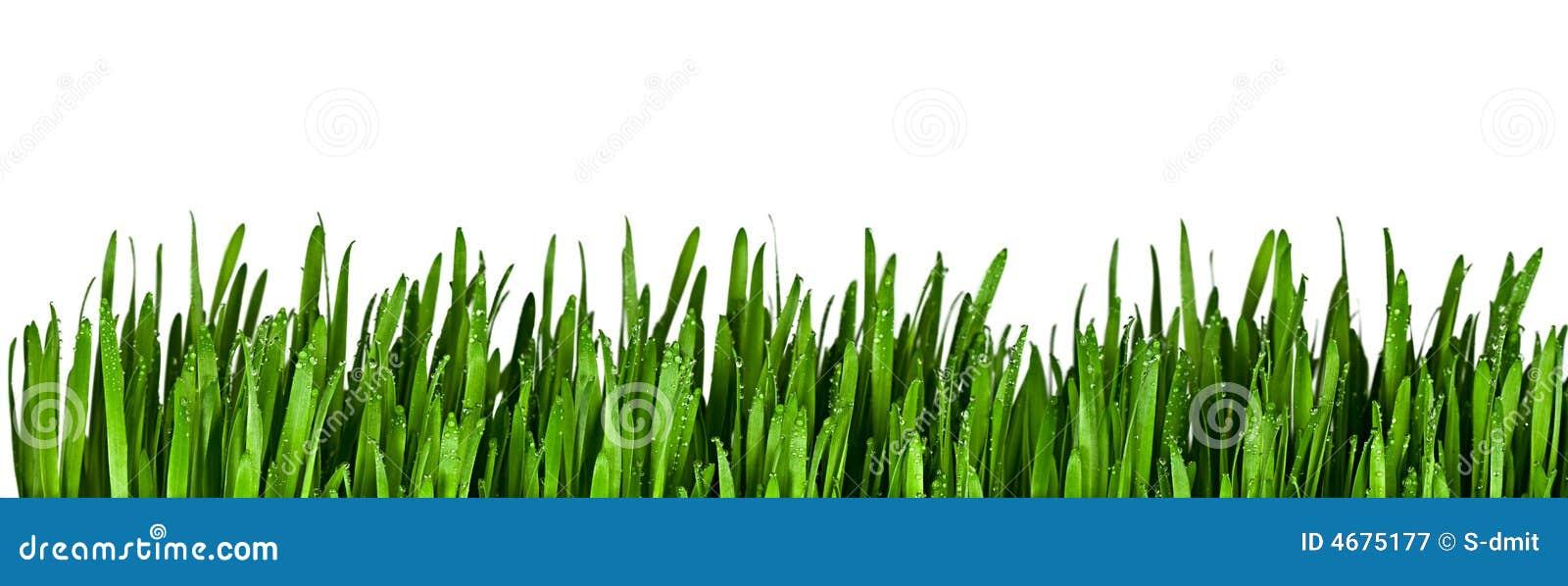 зеленый цвет травы