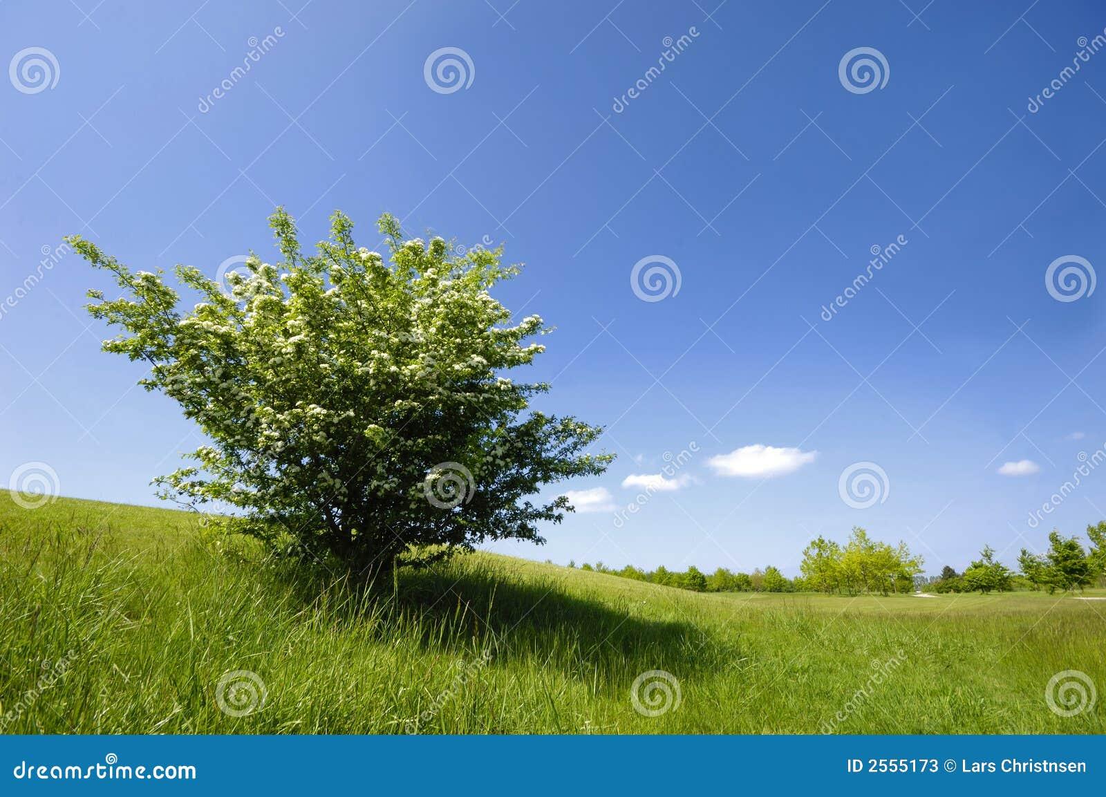 зеленый цвет bush