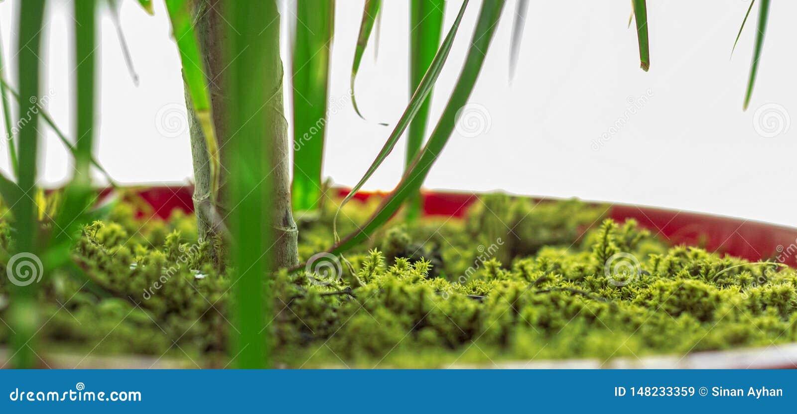 Зеленым цветочный горшок покрытый мхом