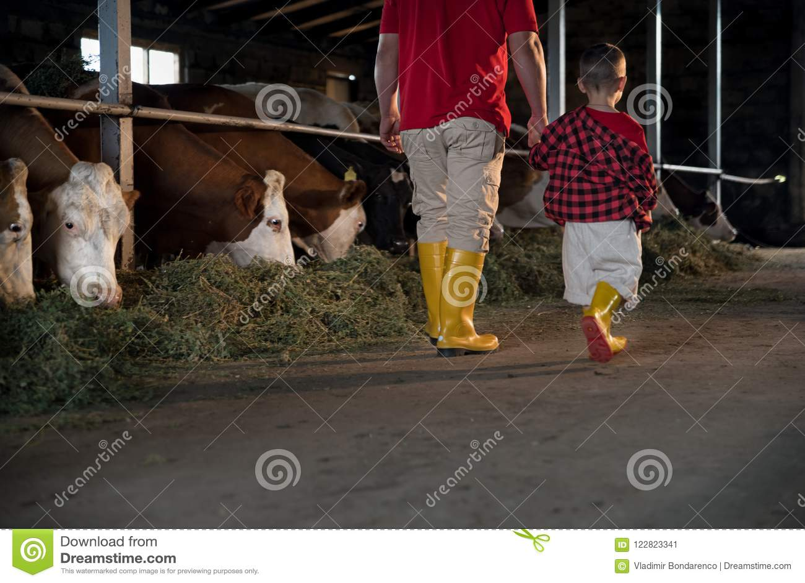 Земледелие, люди и концепция поголовья - человек или фермер при его сын идя вдоль коровника и коров на молокозаводе fa