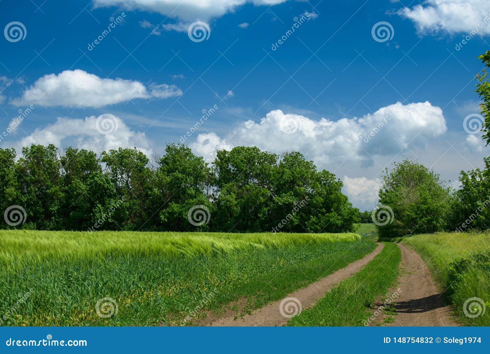 Земная дорога в wheaten поле и красивом пасмурном r