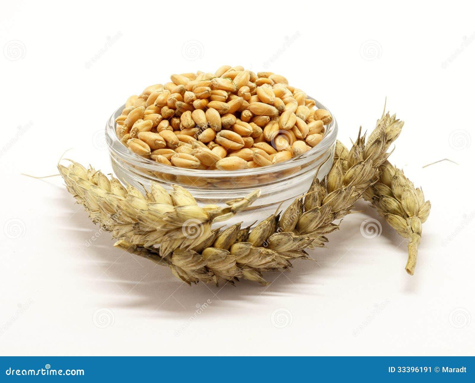 Зерно в шаре с ушами