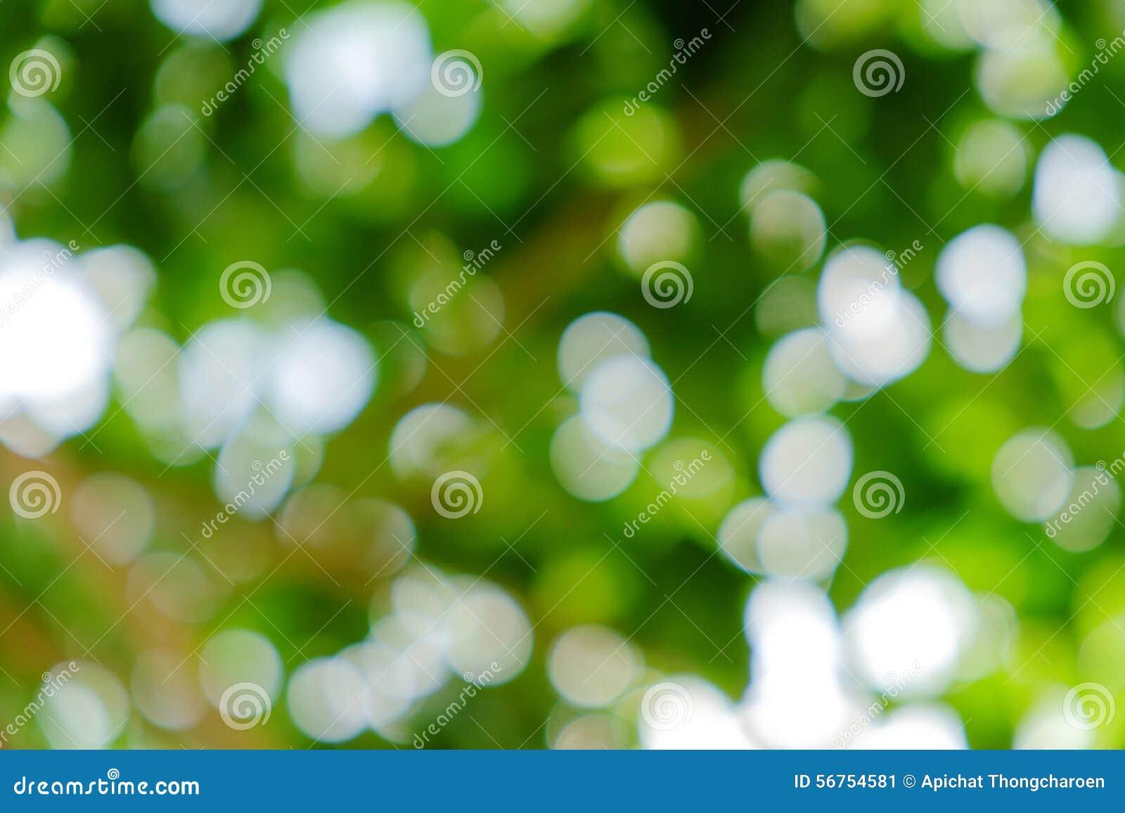 Зеленая естественная предпосылка из дерева или bokeh фокуса