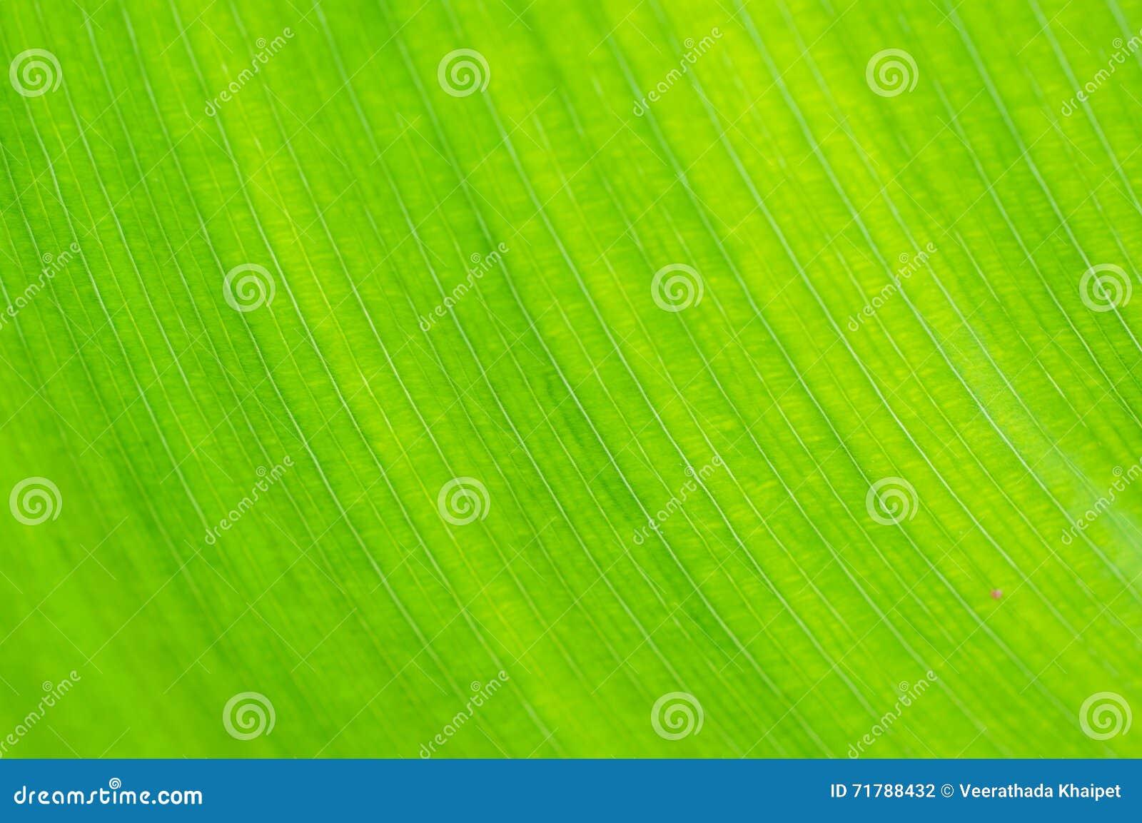 Зеленая предпосылка макроса лист