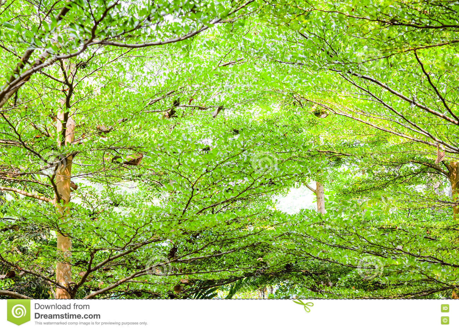Download Зеленая предпосылка пущи в солнечном дне Стоковое Изображение - изображение насчитывающей черный, вечер: 72281545