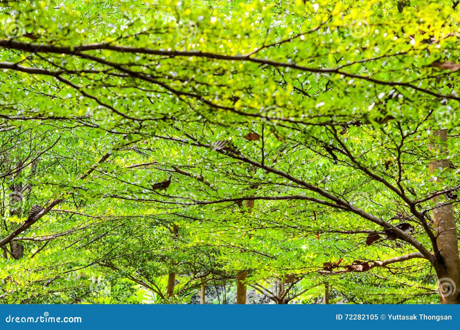 Download Зеленая предпосылка пущи в солнечном дне Стоковое Изображение - изображение насчитывающей зарево, сезон: 72282105