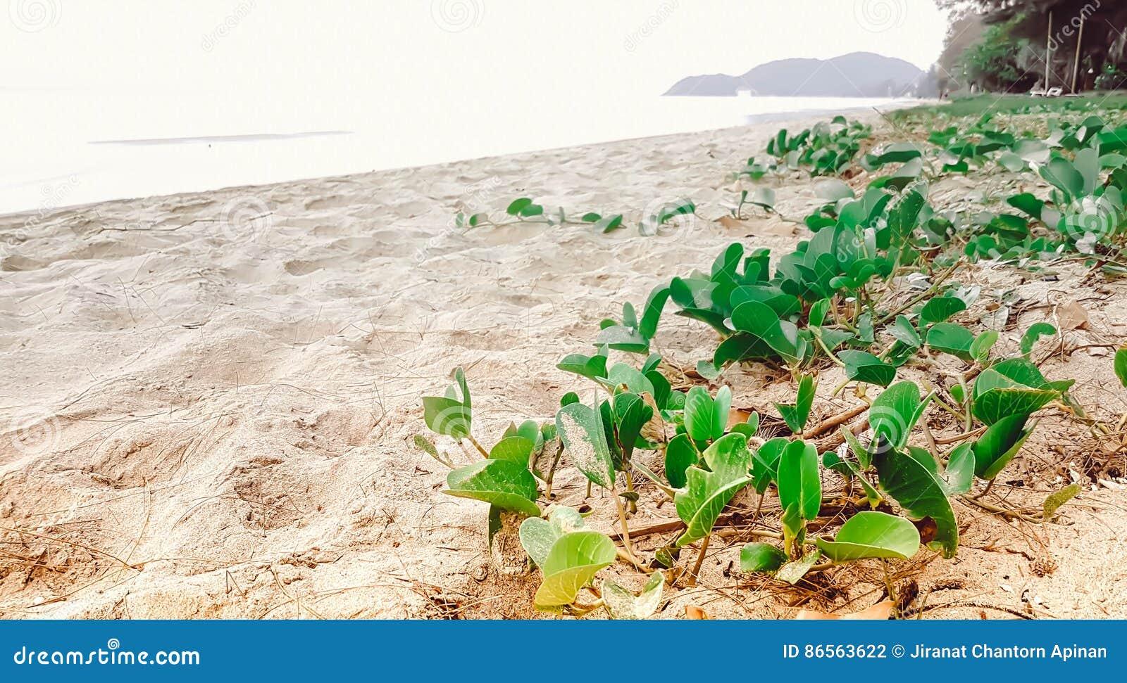 Зеленая свежая слава утра с очень солнечным на пляже