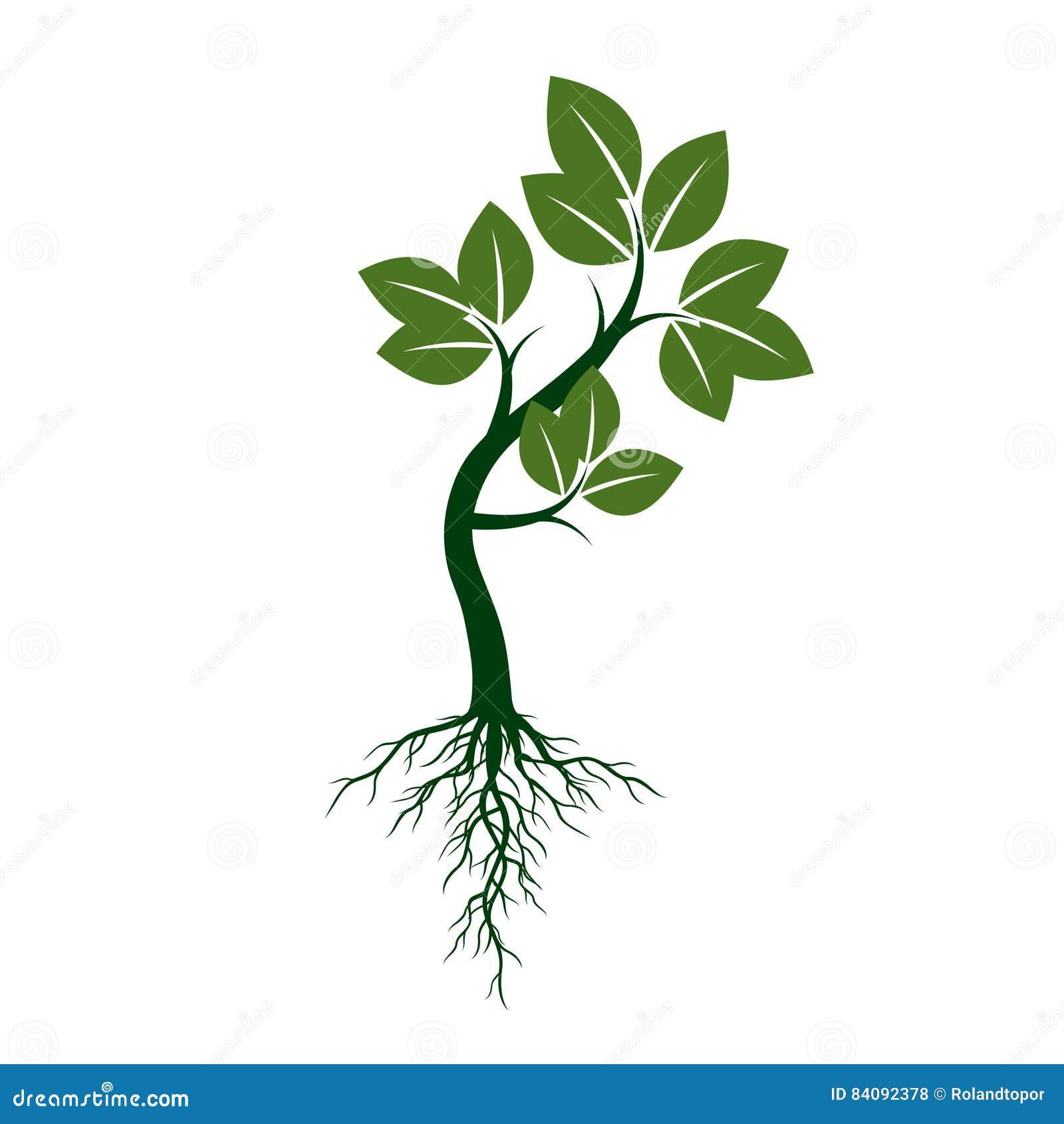 Зеленое дерево с корнями также вектор иллюстрации притяжки ...