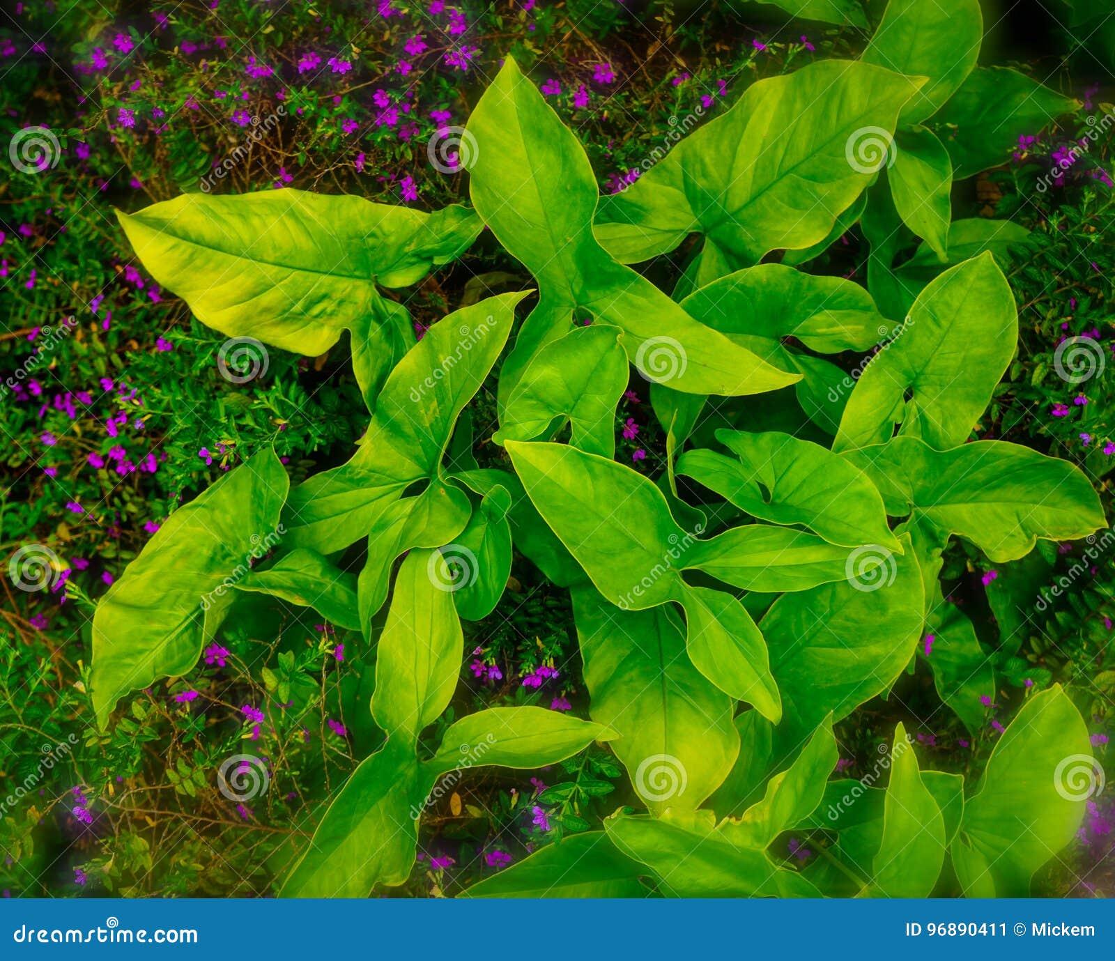 Зеленое растение наконечника
