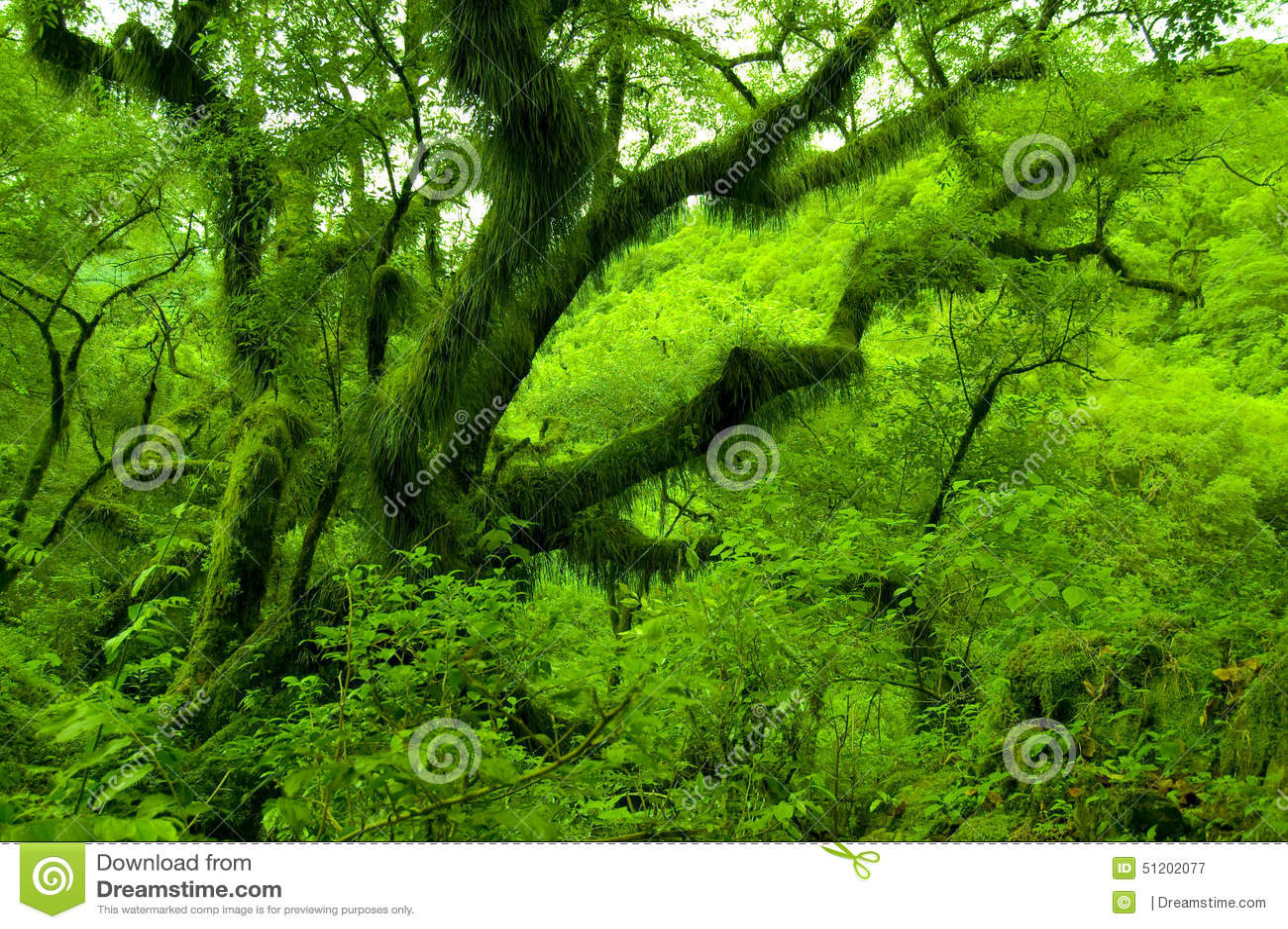 Зеленое Salta