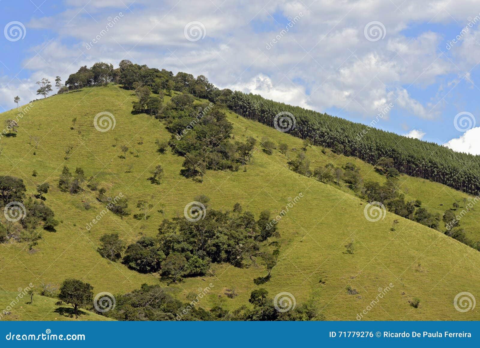 Зеленые холмы с соснами