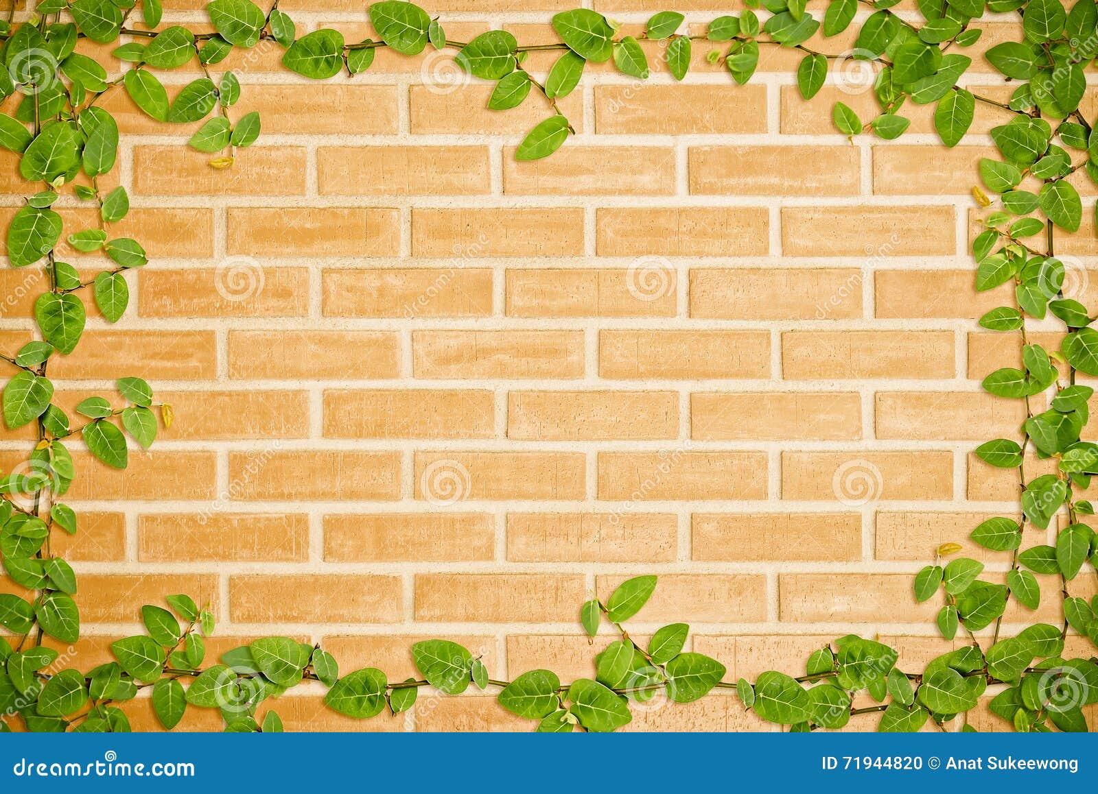 Зеленый плющ на стене