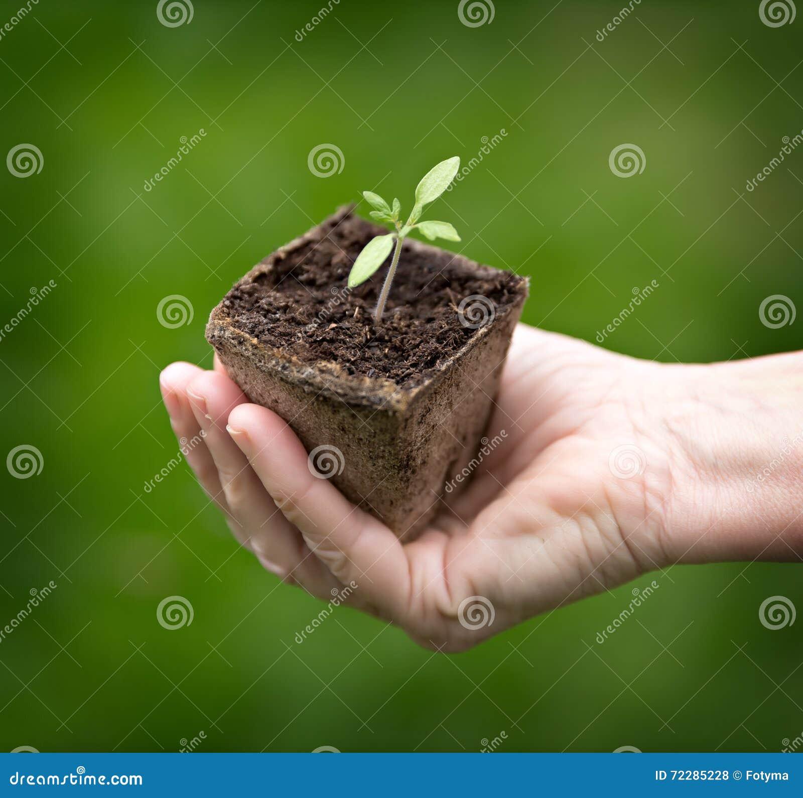 Download зеленый сец руки стоковое фото. изображение насчитывающей росток - 72285228