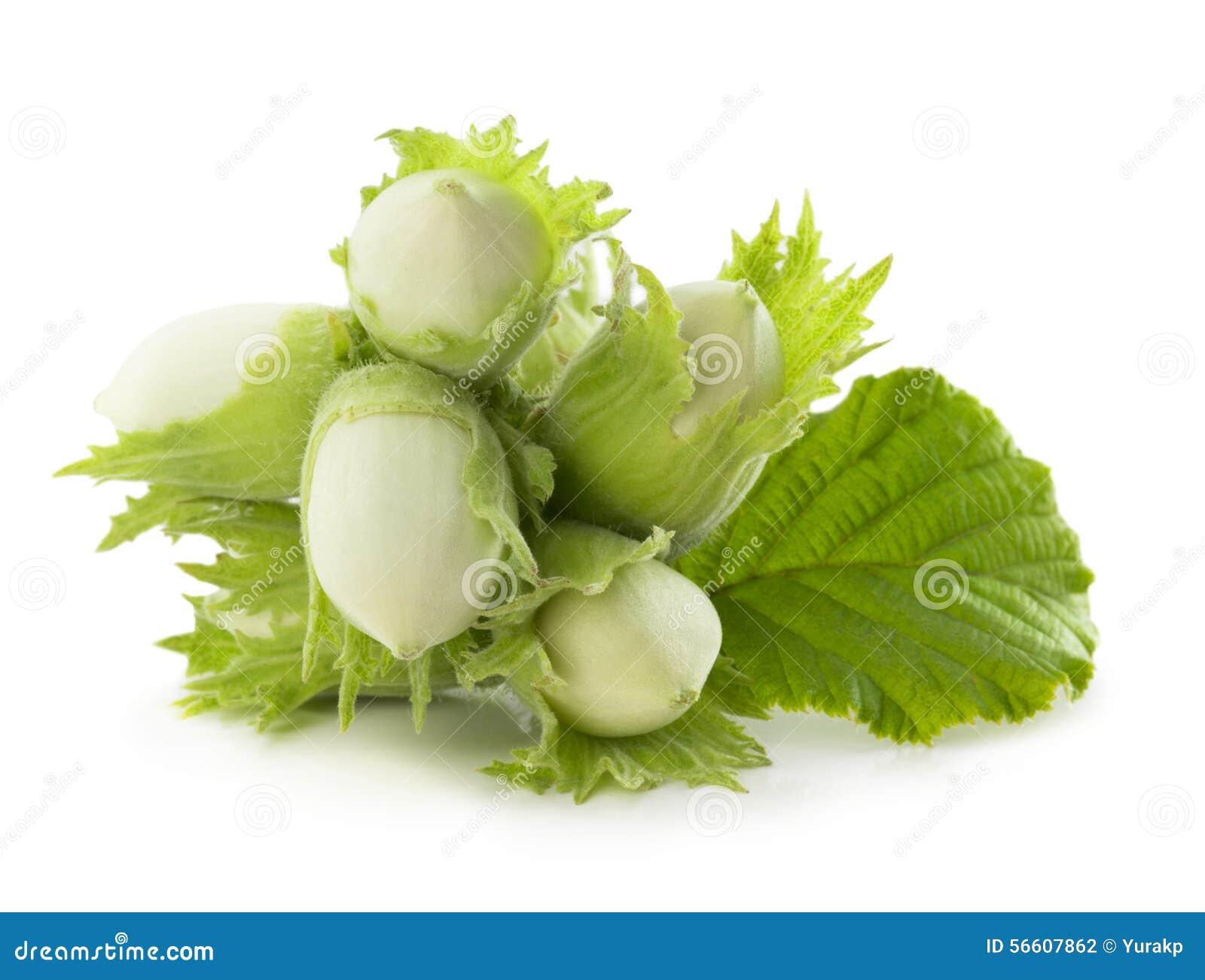 Зеленый фундук изолированный на белой предпосылке