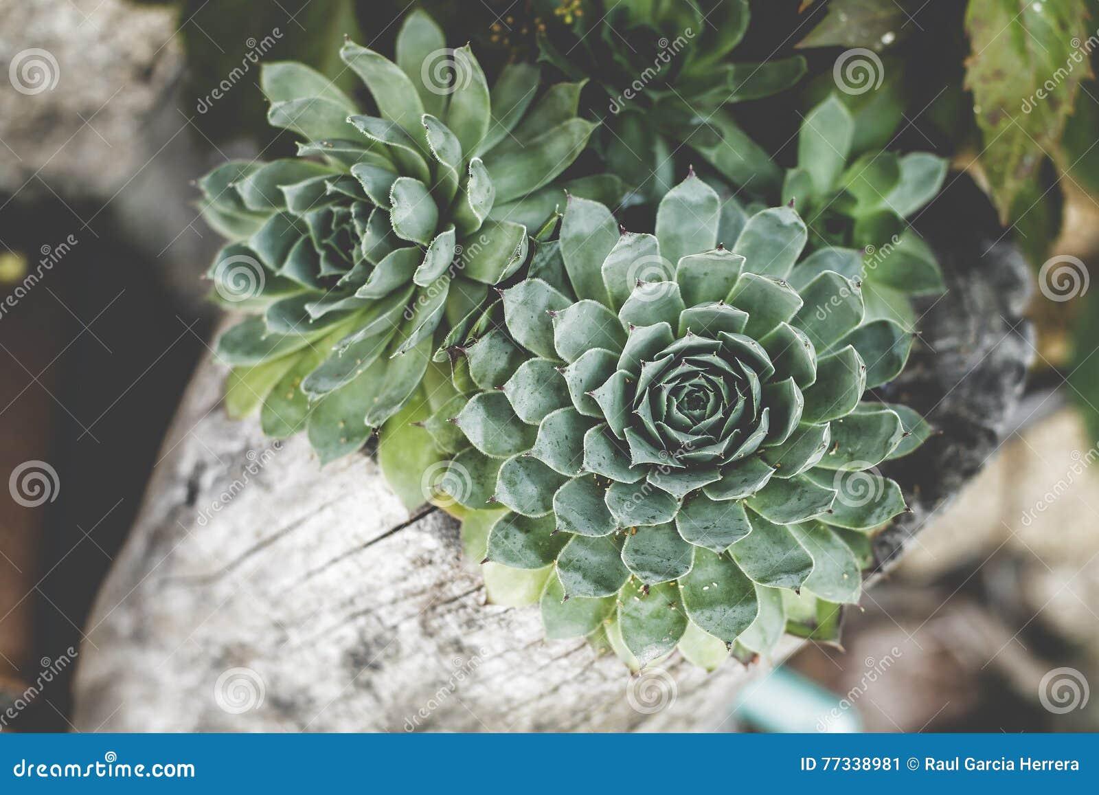 Почему цветок зеленый цветок