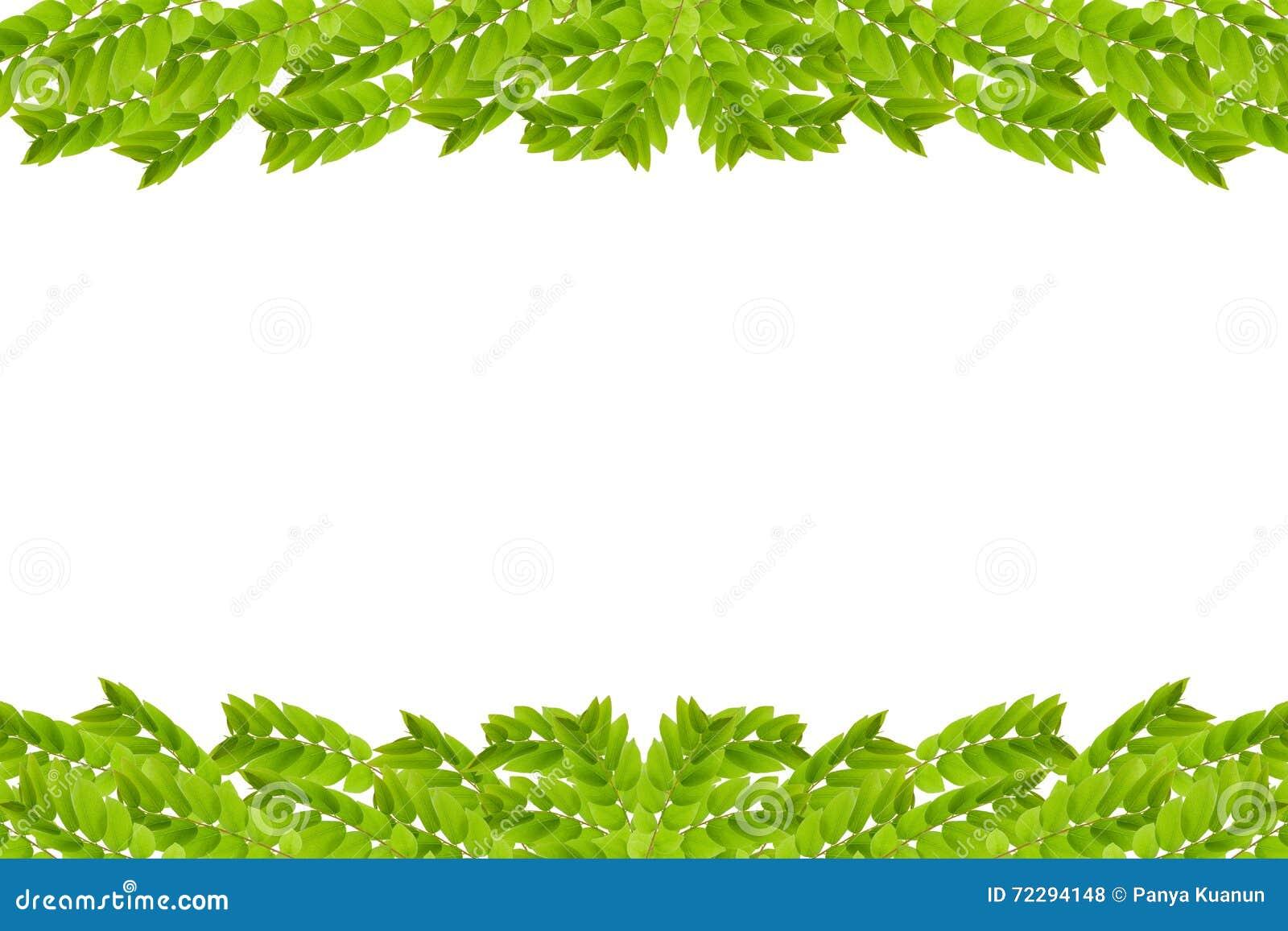 Download зеленый цвет рамки предпосылки изолировал листья белые Стоковое Фото - изображение насчитывающей creeper, экземпляр: 72294148