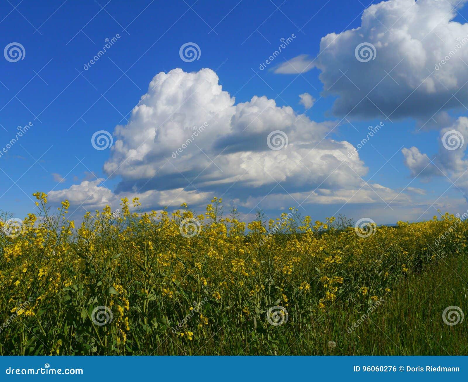 Зеленый цвет fields лес Германия заводов природы солнца лета