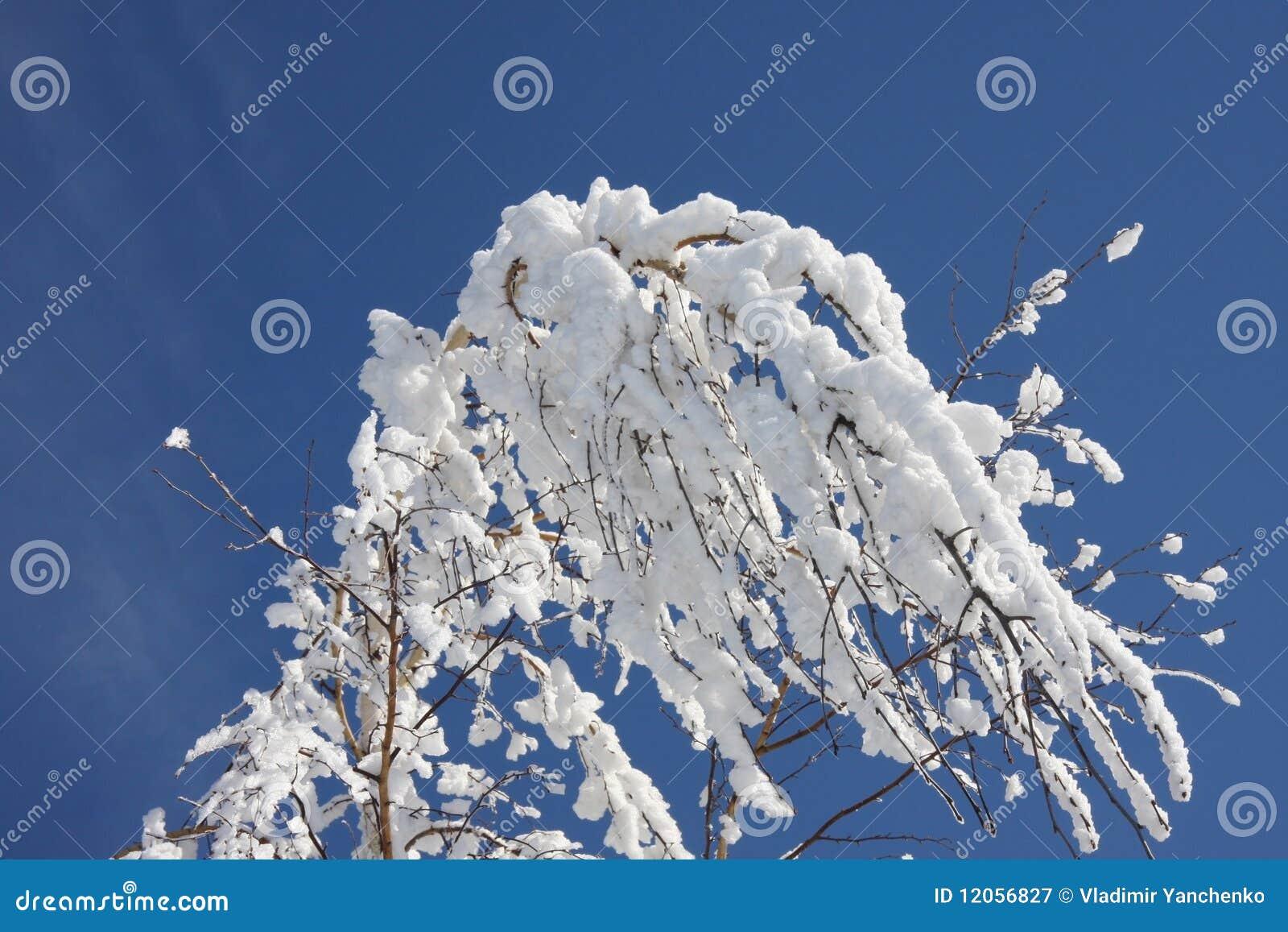 зима березы