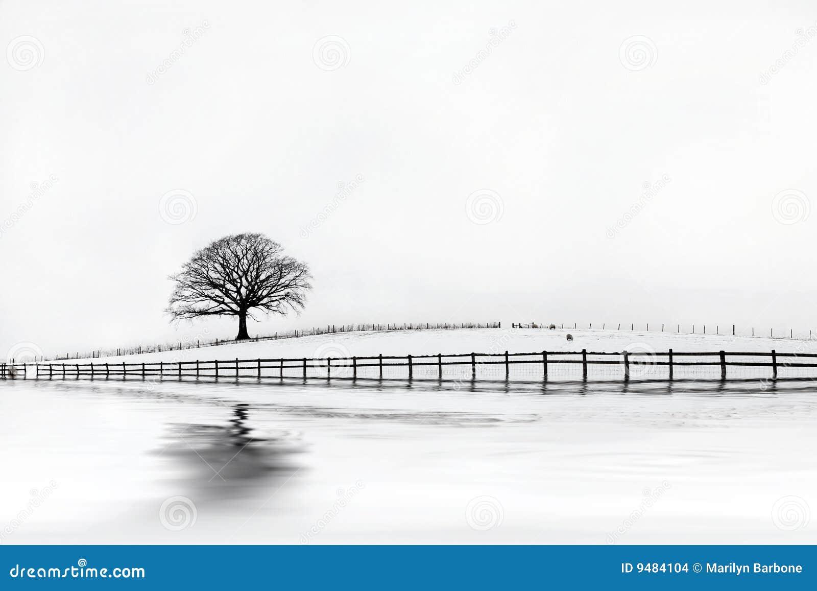 зима вала дуба красотки