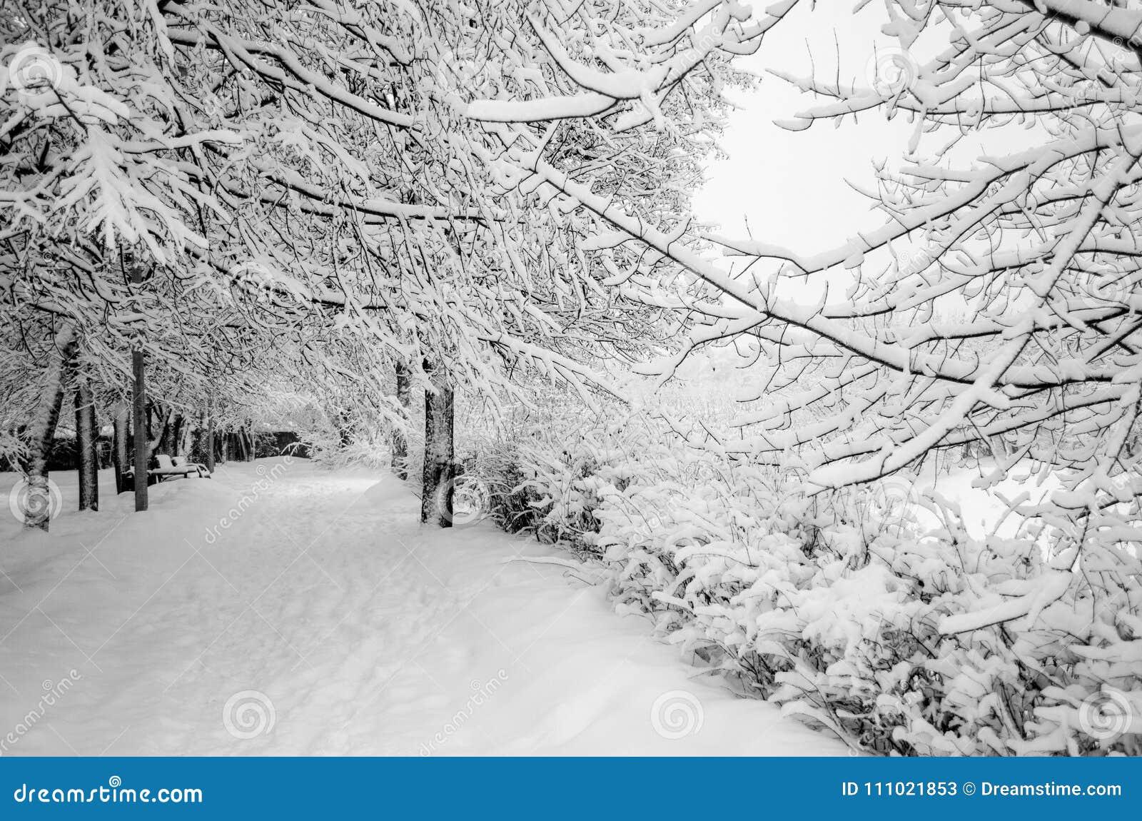 Зима в парке в феврале после снежности