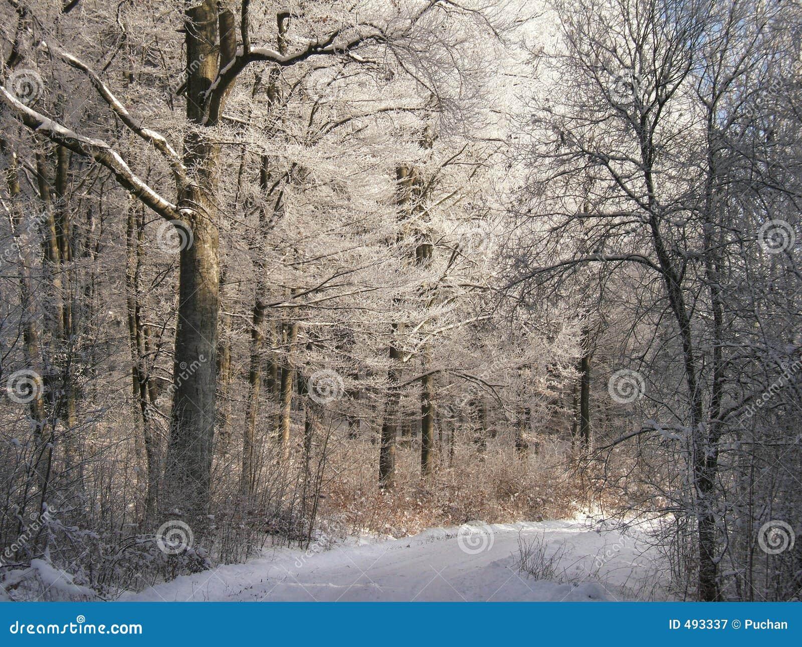 зима дороги пущи