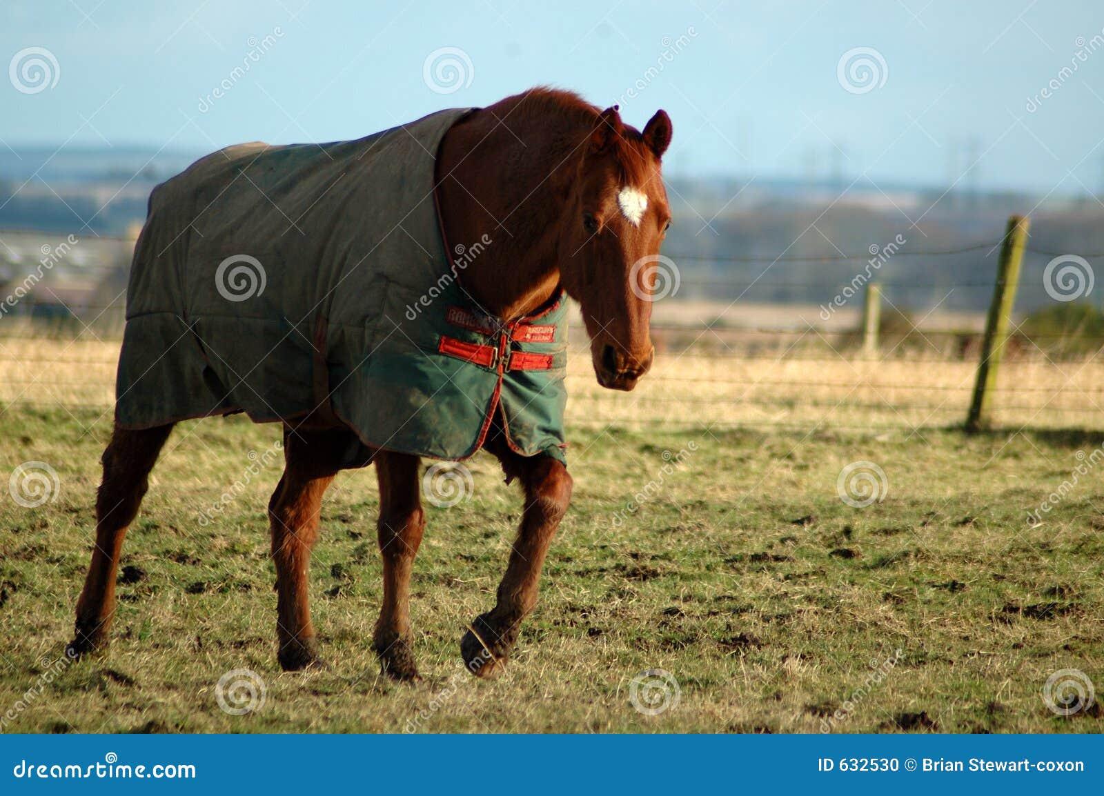 Download зима лошади стоковое фото. изображение насчитывающей пони - 632530