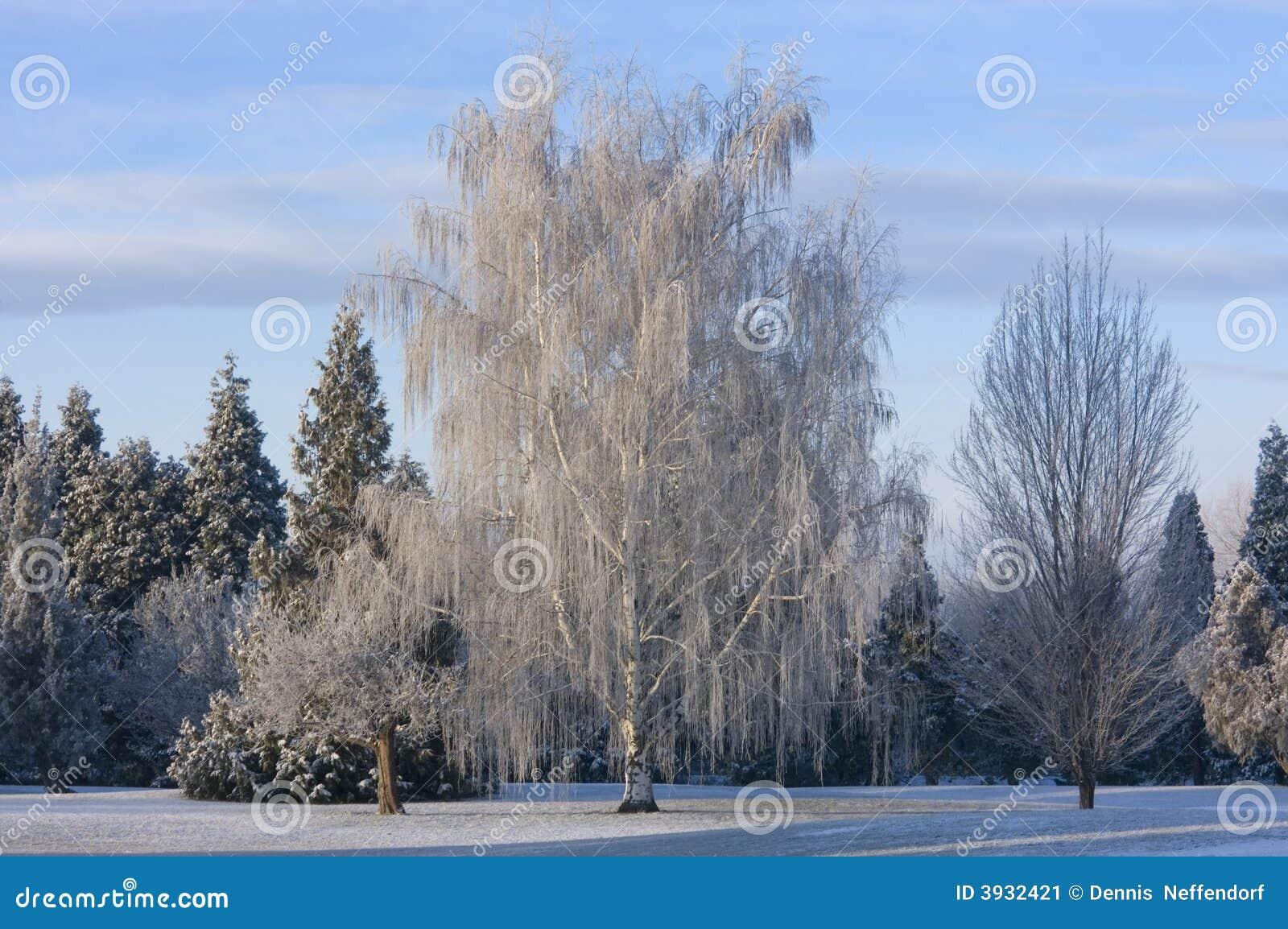 зима места парка