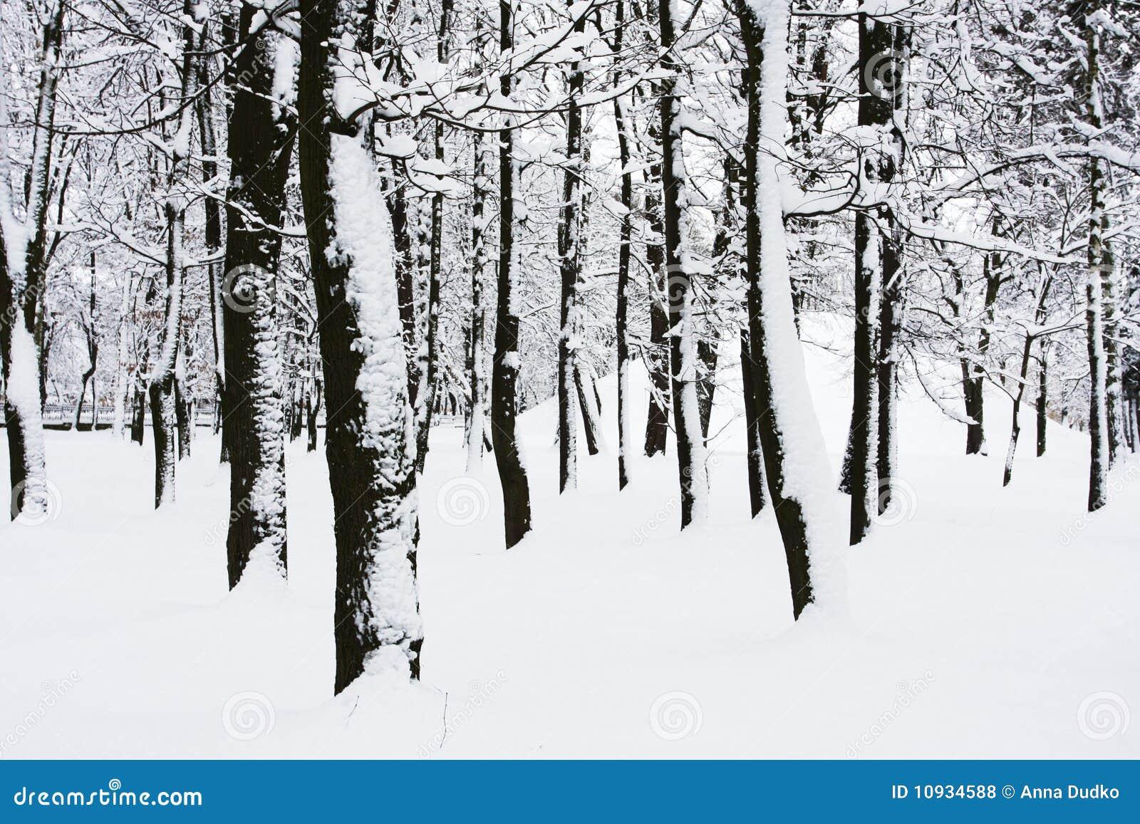 зима парка