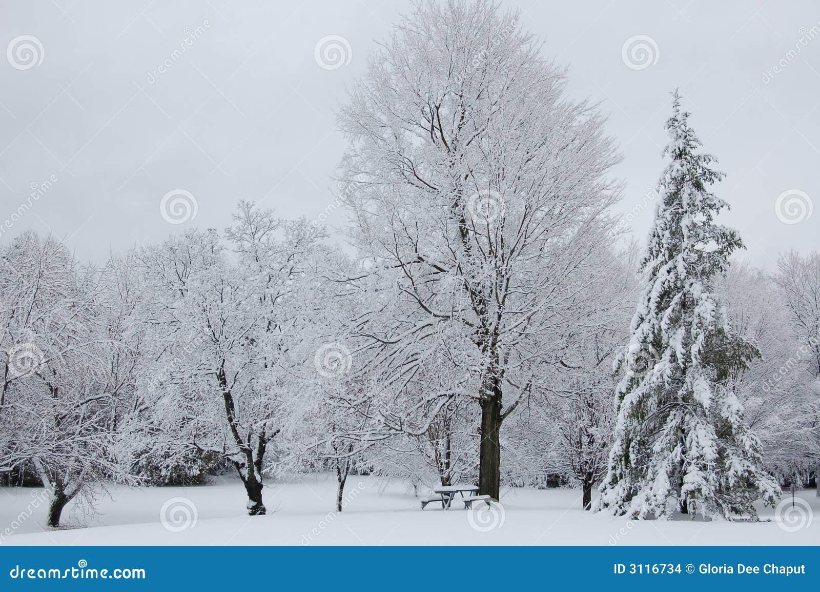 зима пикника