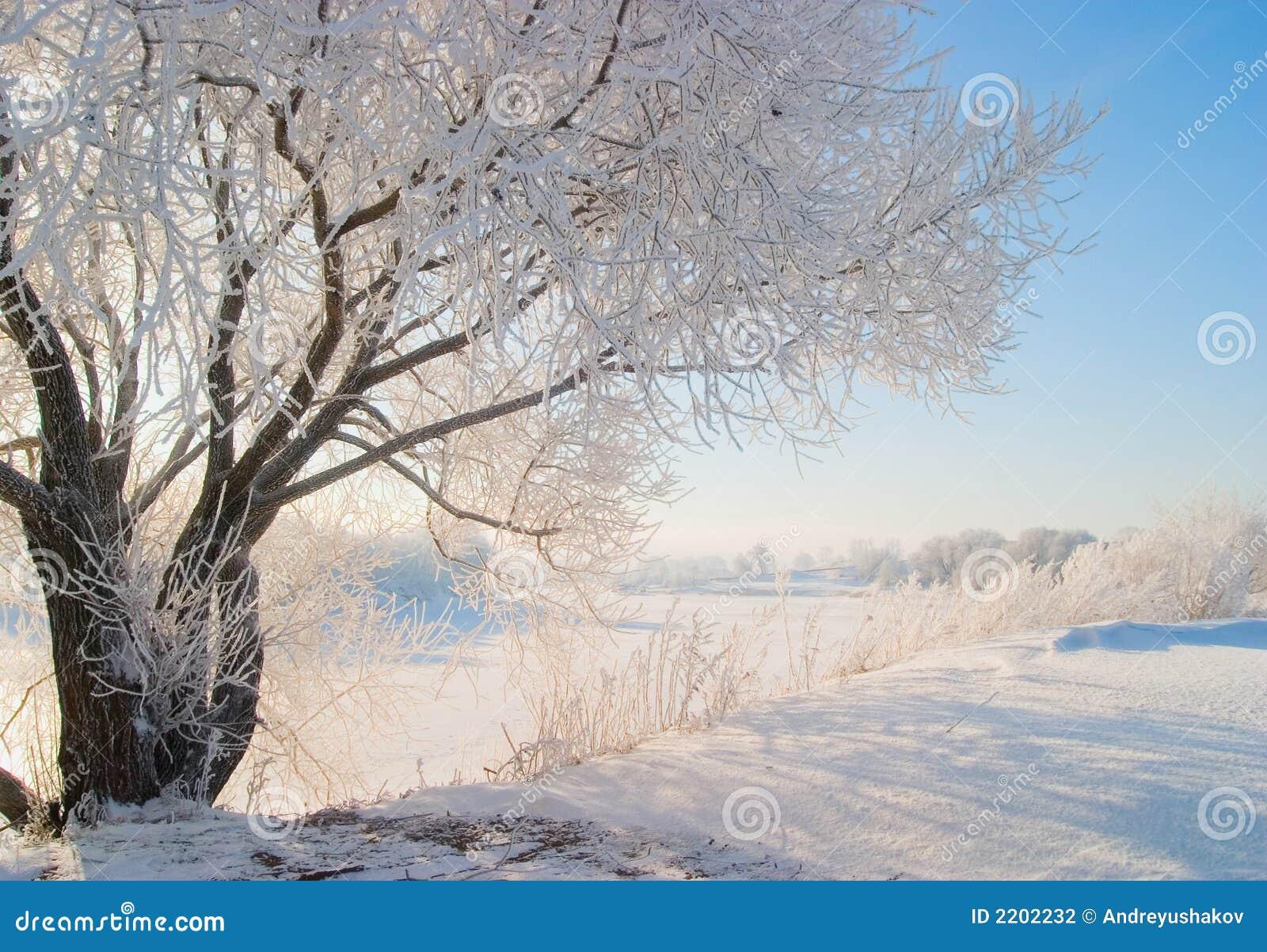 зима природы