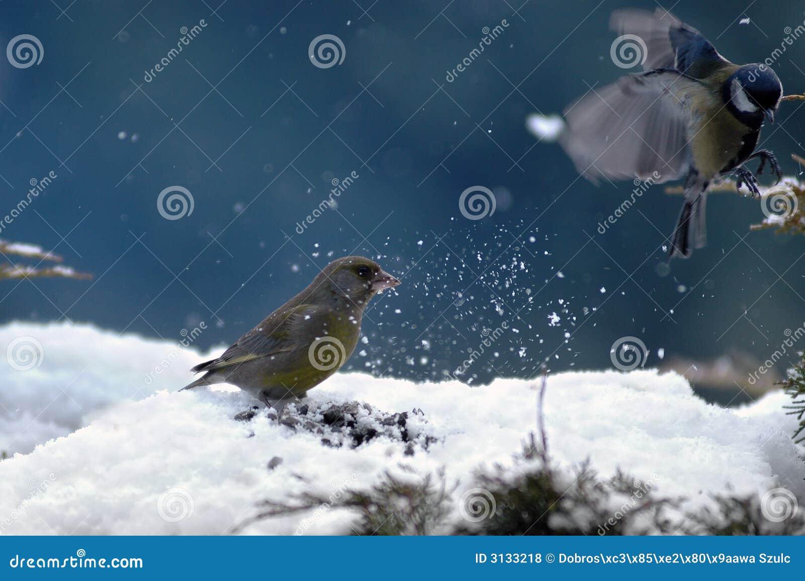 зима птиц
