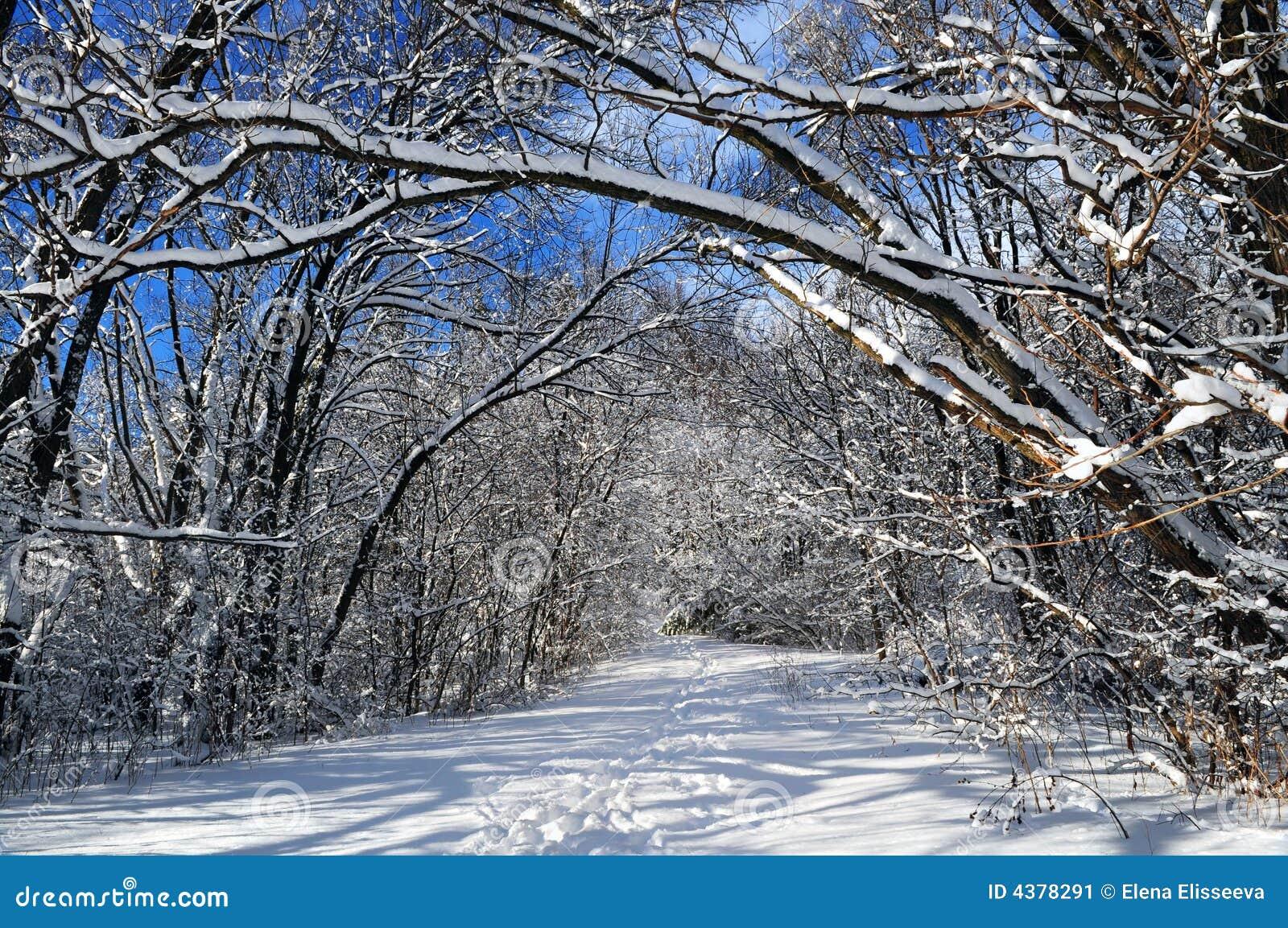 зима путя пущи
