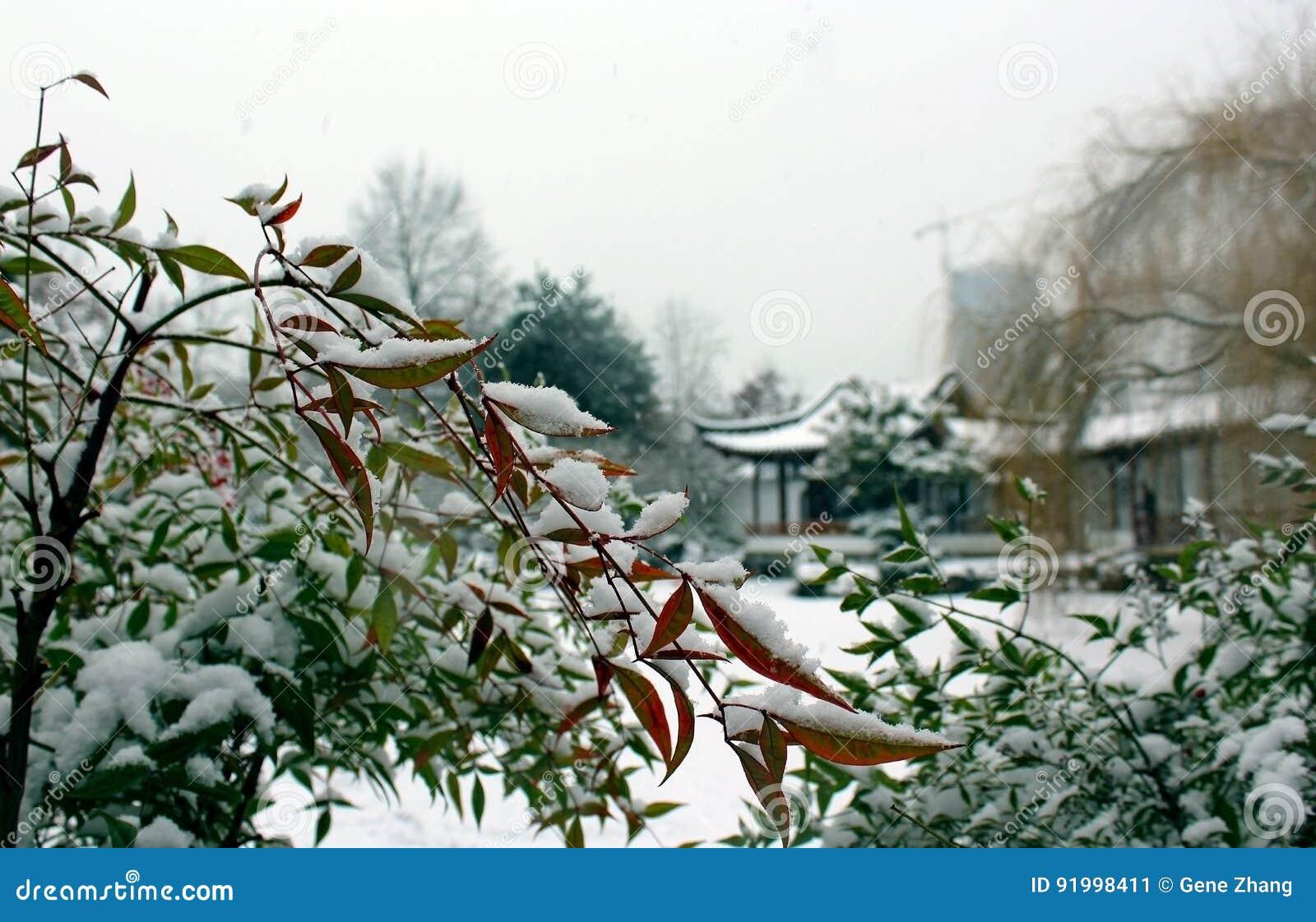 зима сада