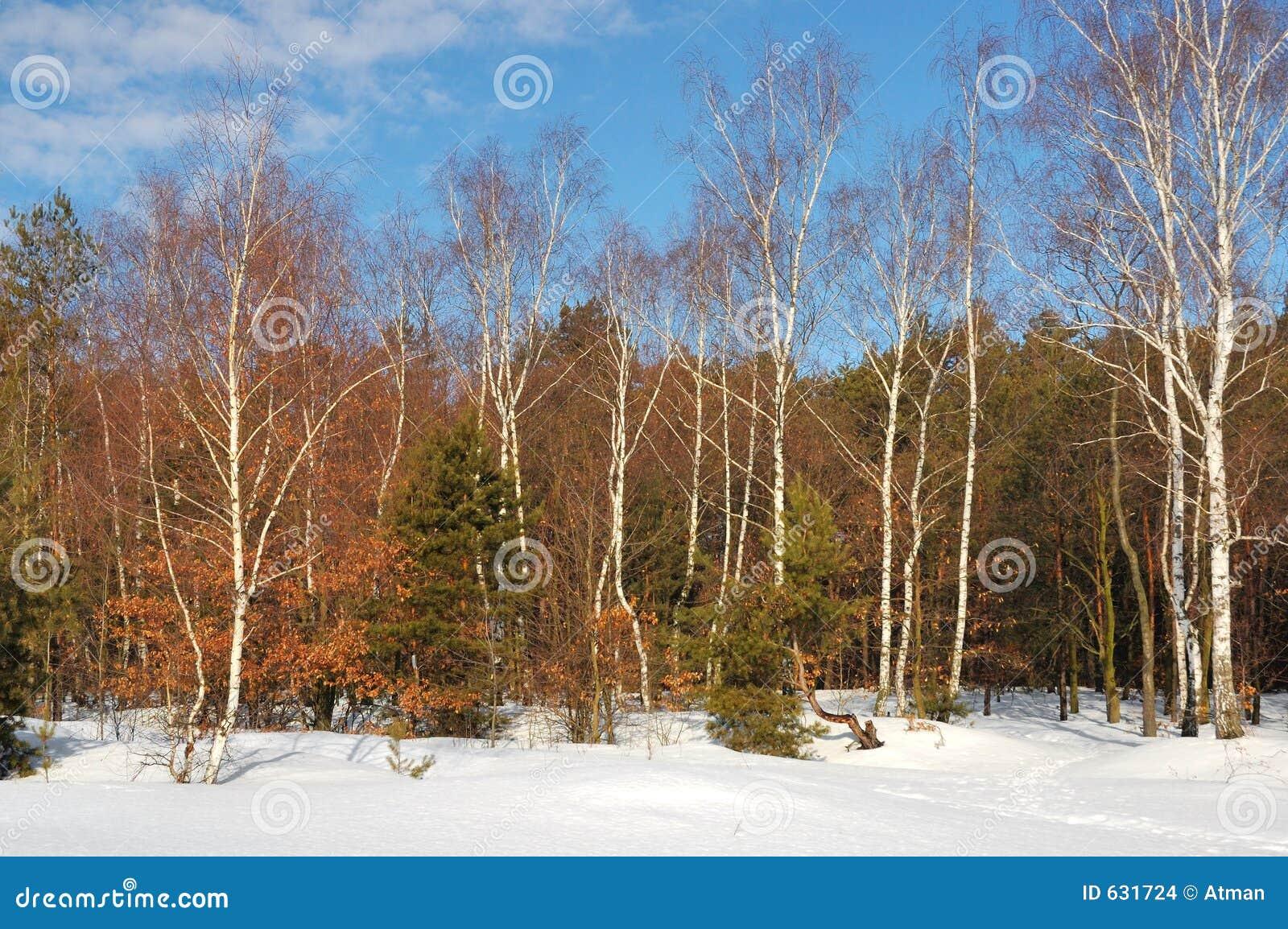 Download зима стоковое фото. изображение насчитывающей bluets, декабрь - 631724
