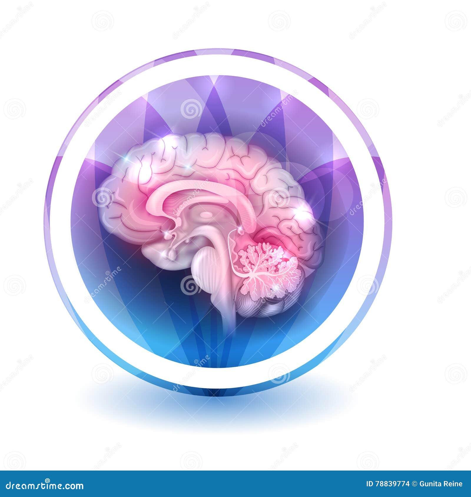 Знак мозга