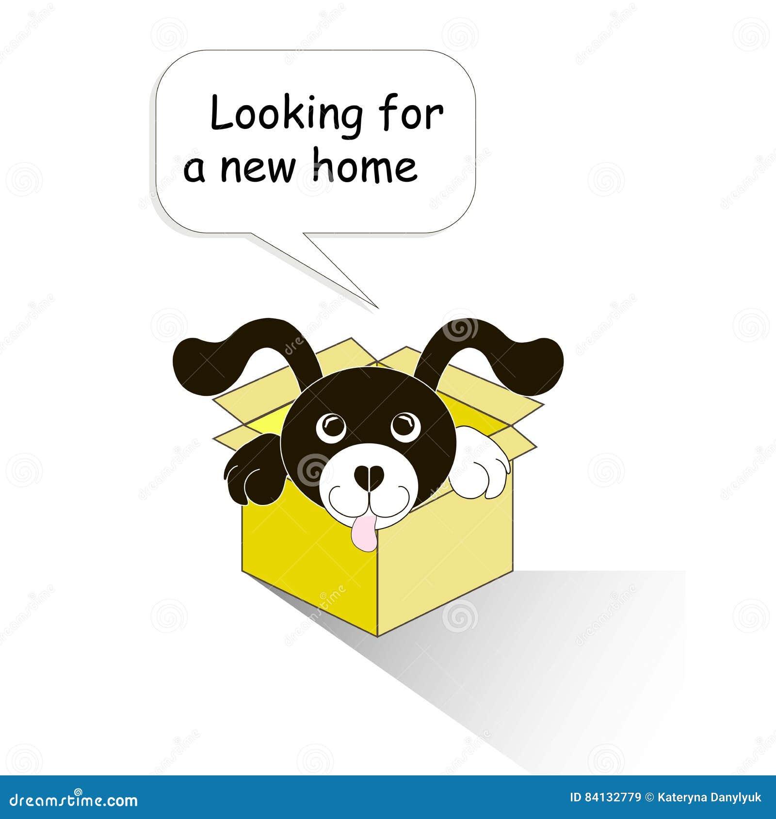 Знамя оформления ища новый дом, черно-белая собака шаржей в желтой коробке на белизне