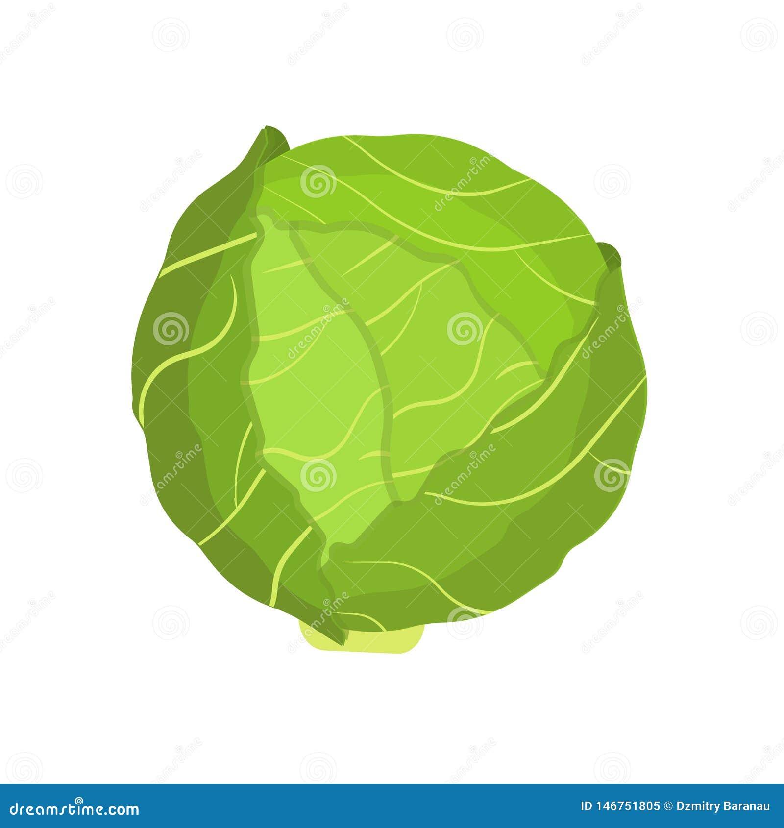 Значок вектора символа природы диеты овоща капусты естественный плоско Зеленая еда ингредиента сбора завода фермы Салат лист лист
