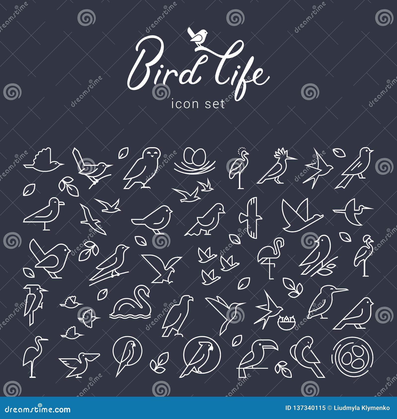 Значок птиц вектора плоский установил в тонкую линию стиль Простой minimalistic логотип птицы Значок птиц, животный знак, символ