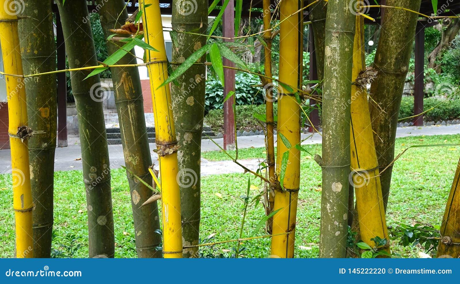 Золотая бамбуковая иллюстрация предпосылки