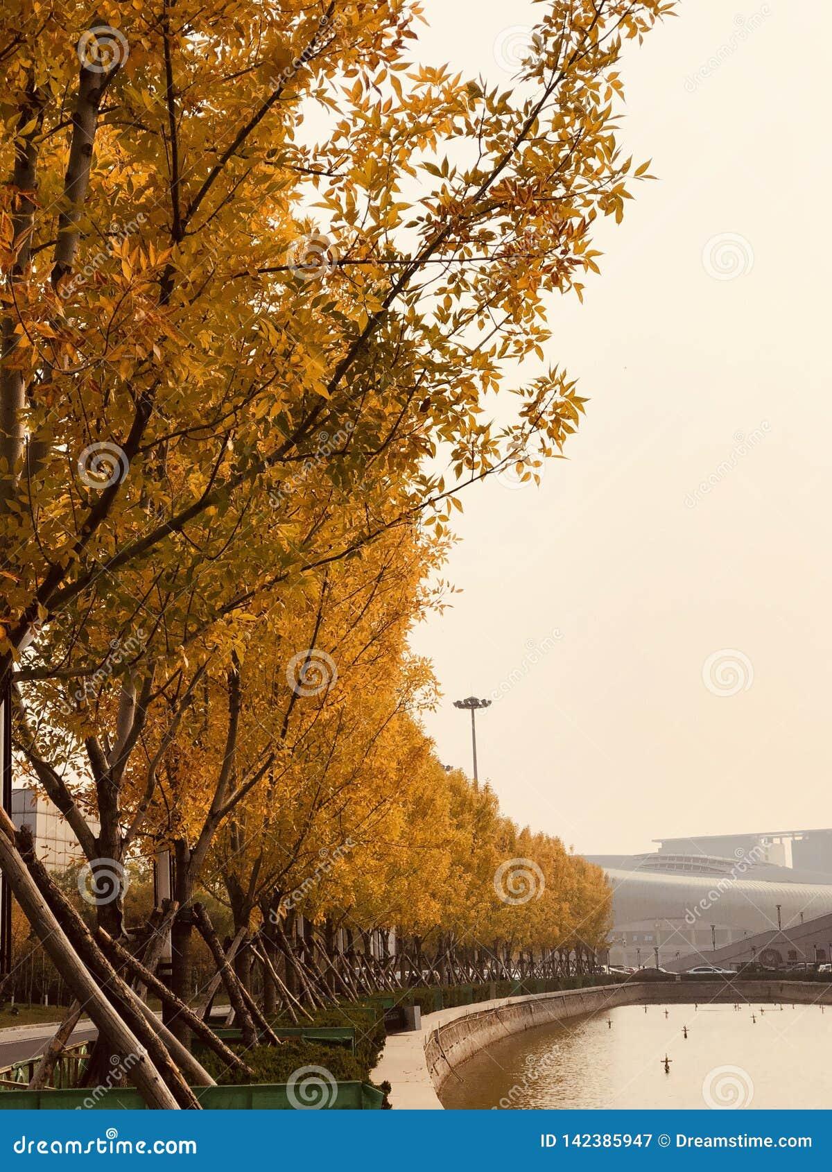 Золотая осень дерева в парке